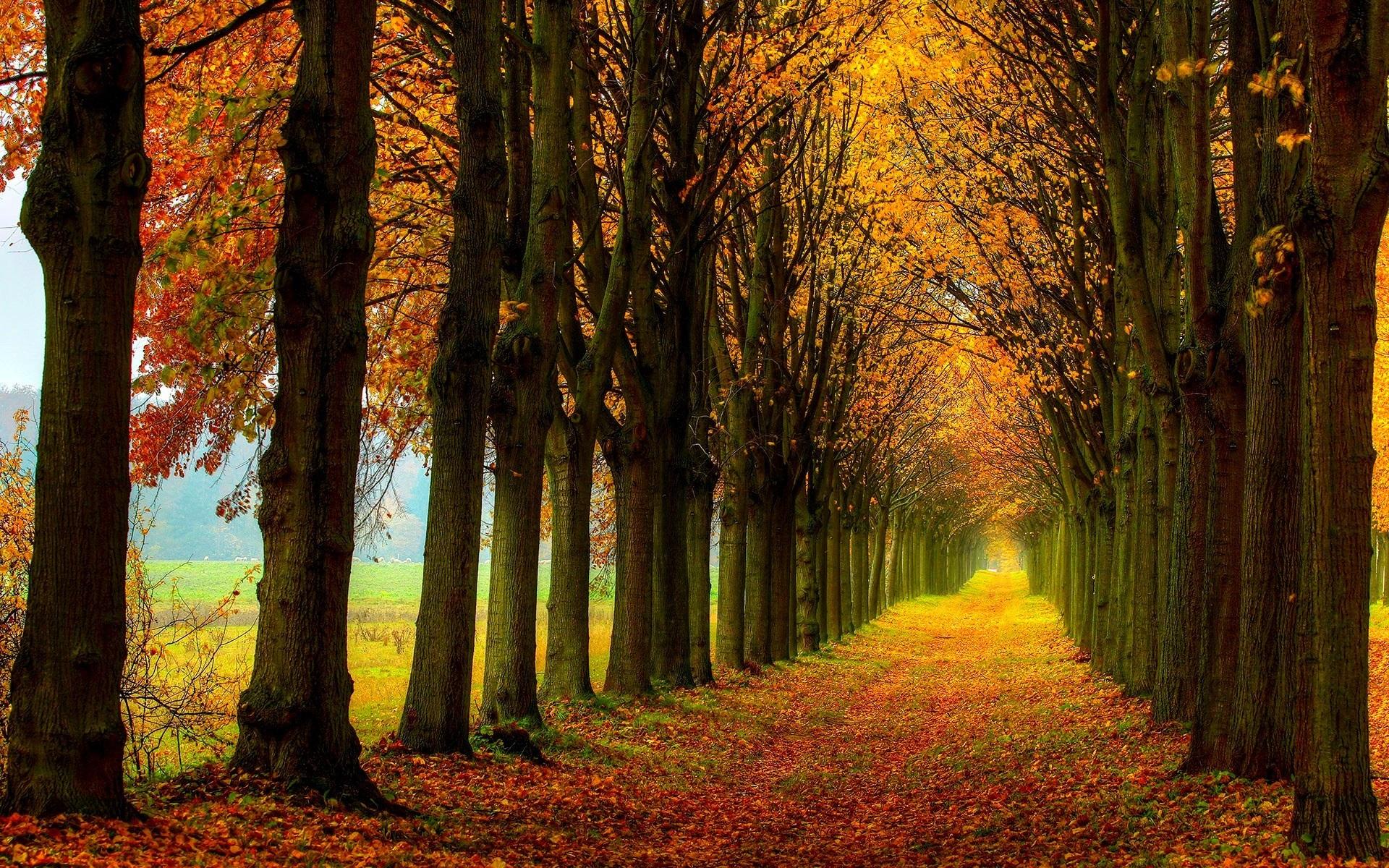 Autumn Fall Wallpaper 1600x900 Beautiful Nature Scenery Forest Trees Autumn Path