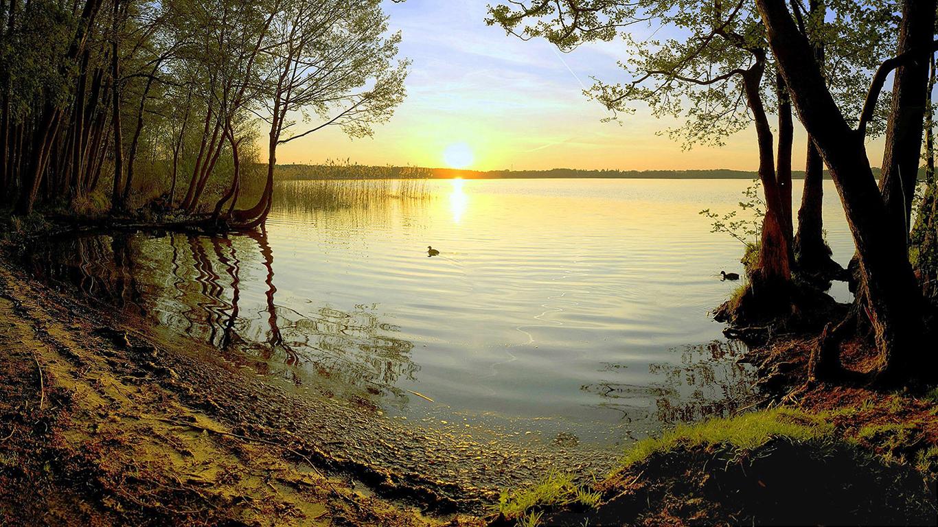 Cute Duck Wallpaper Lake Duck Sunset Sunlight Shore Trees Swamp Bird Hd