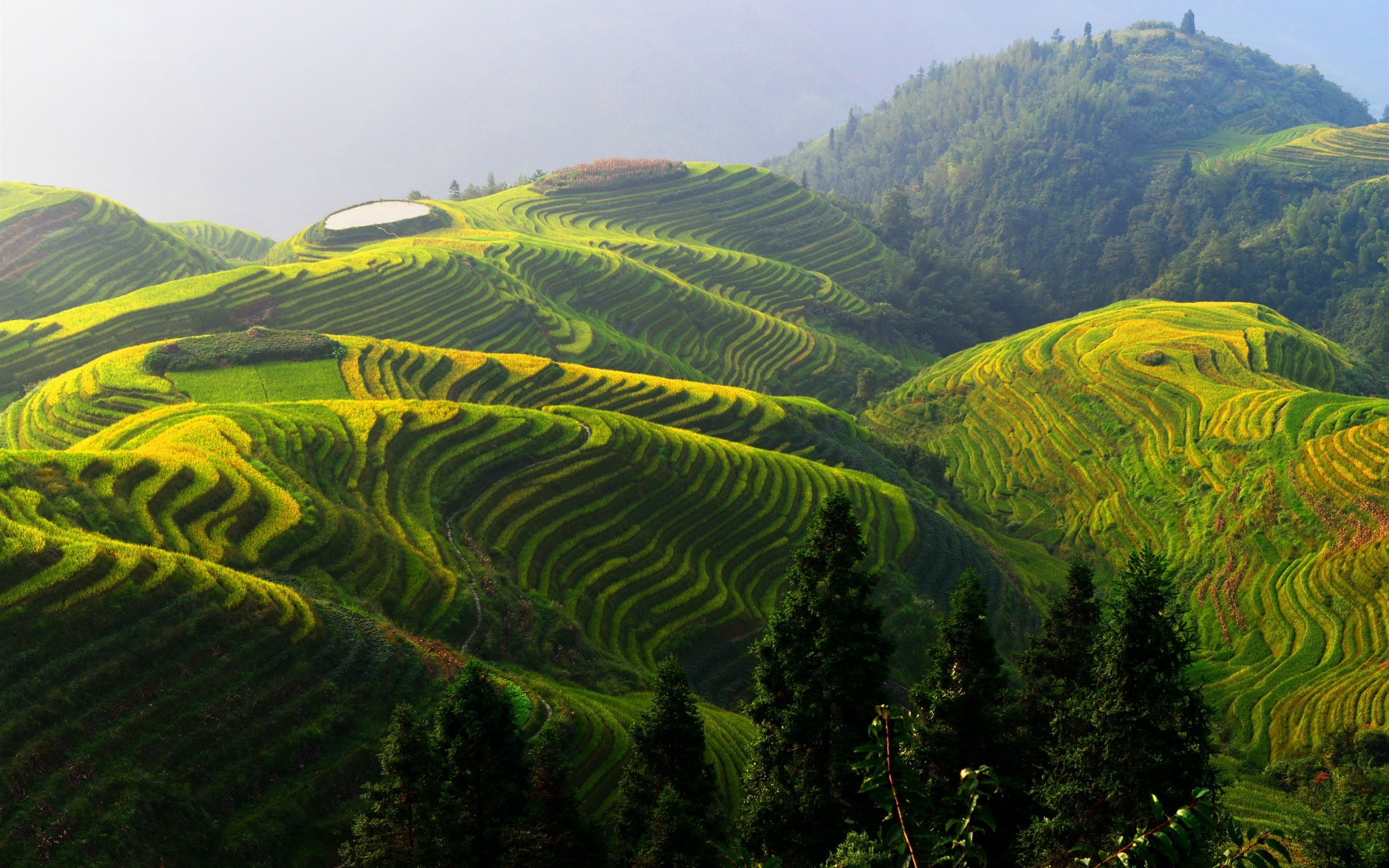 Cute Anime Pictures Wallpapers Longji Rice Terraces China Beautiful Countryside