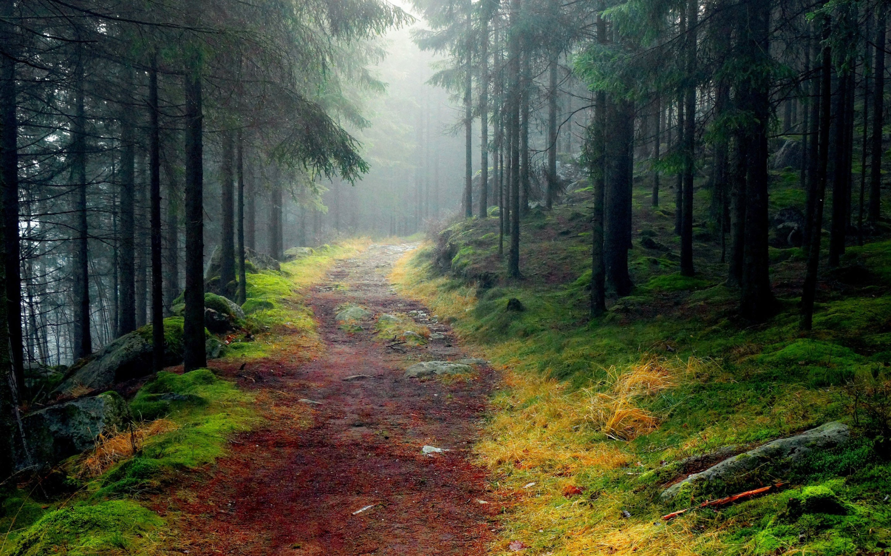 3d Wallpaper Hd 1080p Free Download For Pc Rusty Path Through Foggy Forest Wallpaper Nature And