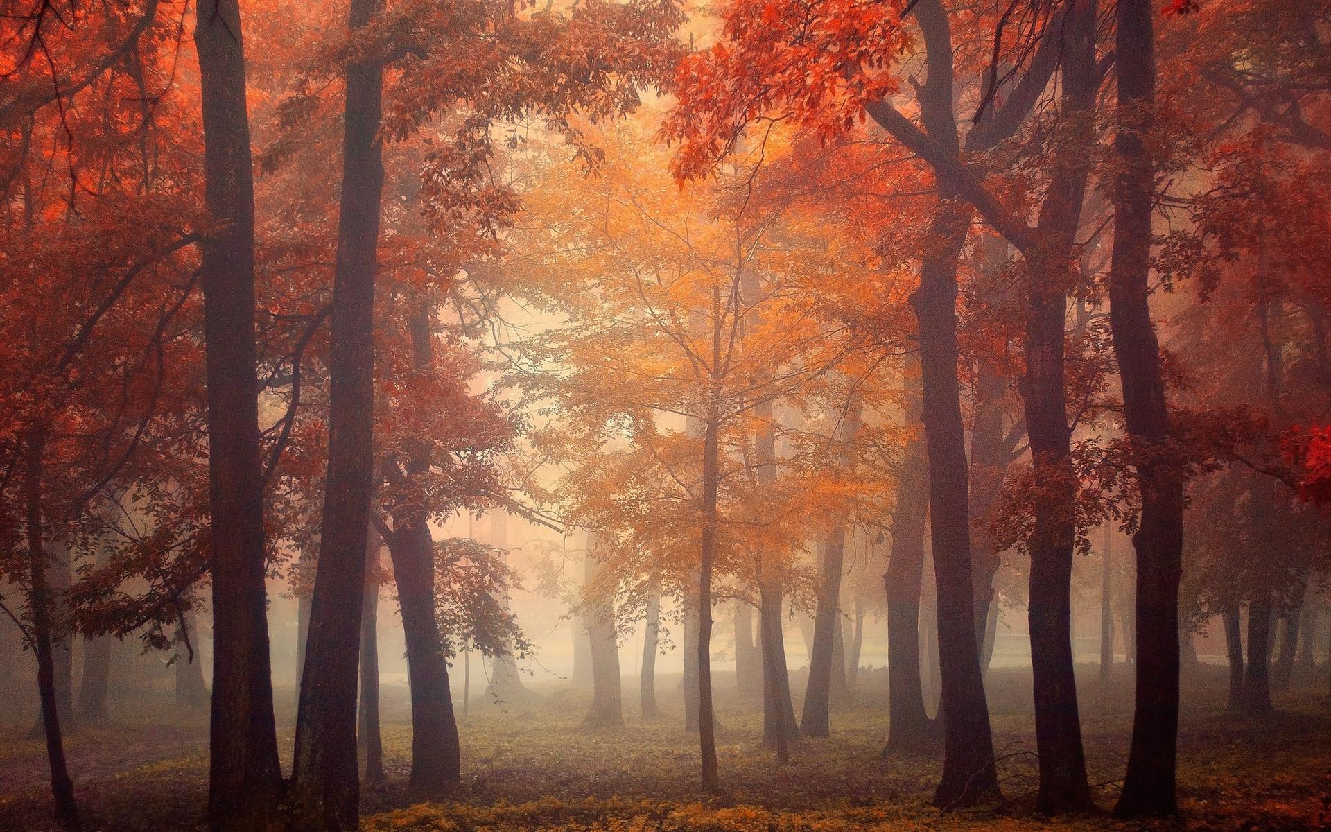 Autumn Falling Leaves Wallpaper Mist Trees Fall Leaves Red Park Morning Sunrise