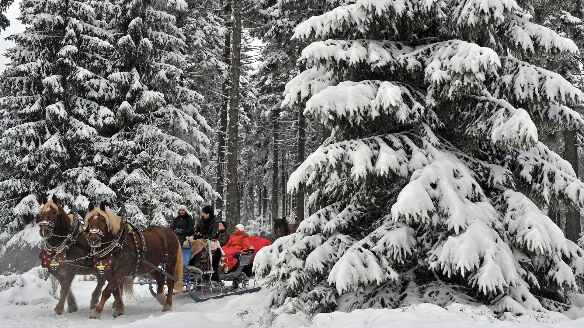 Cute Christmas Owl Desktop Wallpaper Horse Drawn Carriages In German Winter Forest Wallpaper