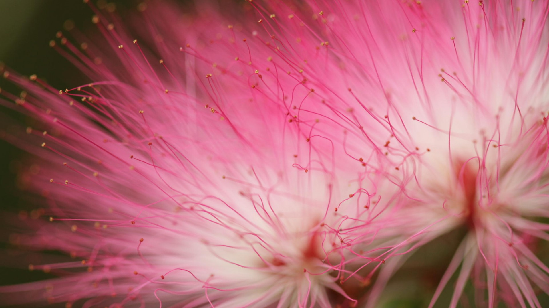 3d Wallpaper Hd 1080p Free Download For Pc Pink Flowers Macro Photography Flowers Wallpaper