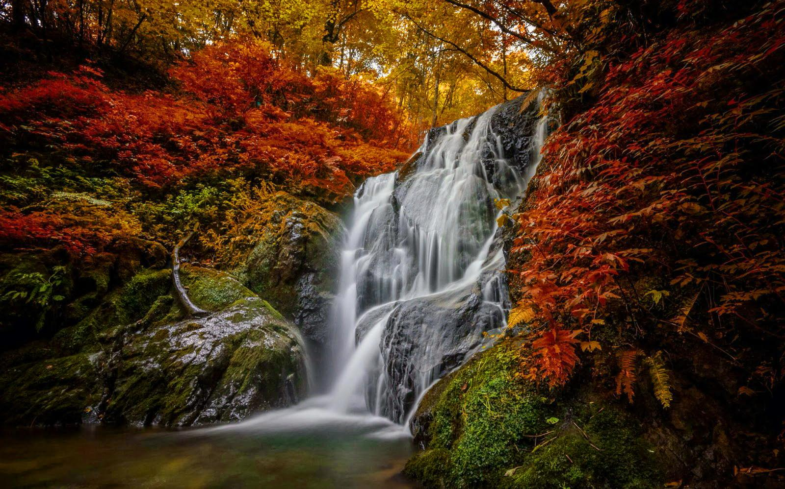 Abstract Fall Colors Wallpaper Forest Water Cascades Wallpaper Nature And Landscape