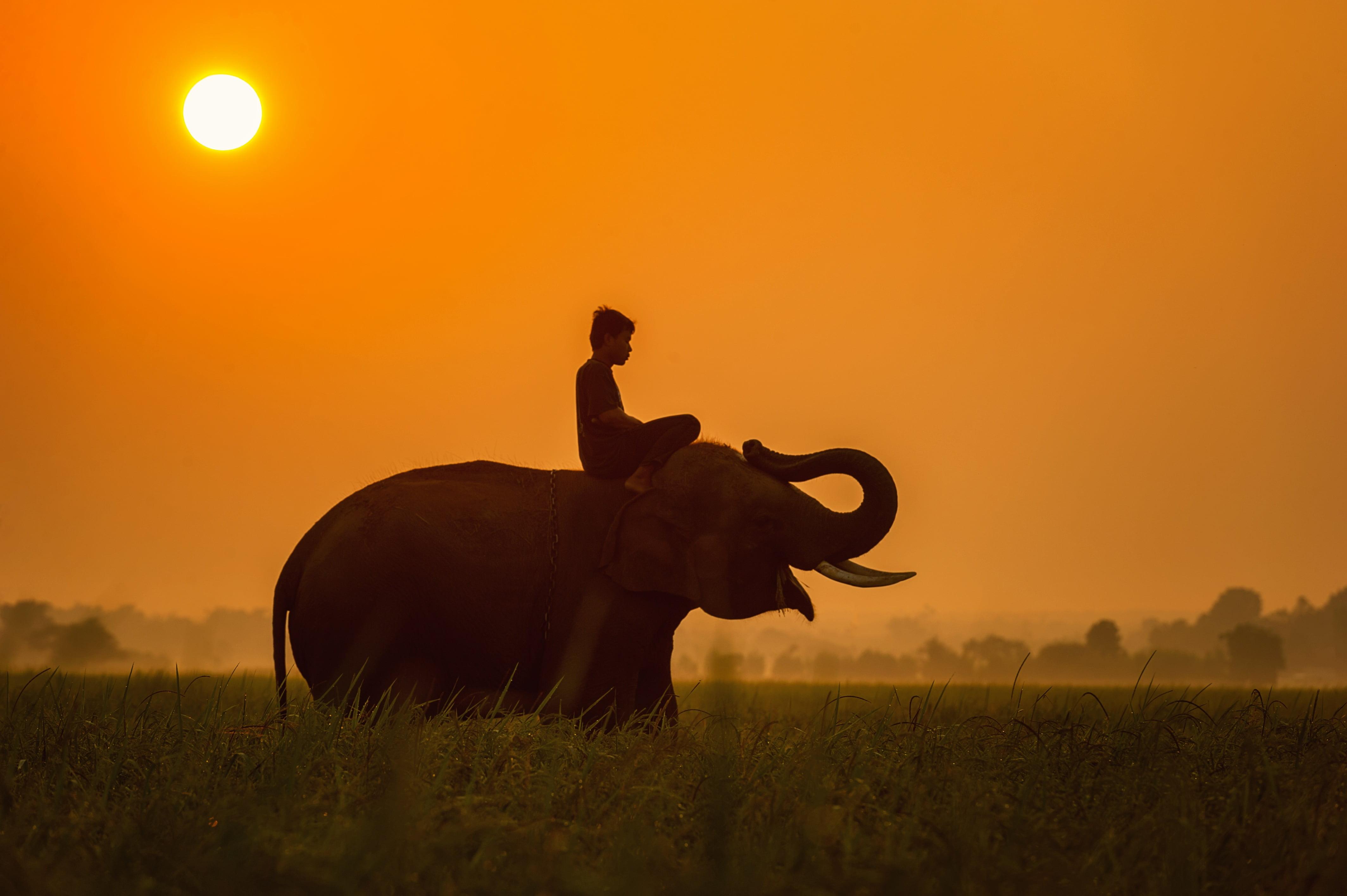 Cartoon Cute Couple Wallpaper Boy On Elephant During Sunset Hd Wallpaper Wallpaper Flare