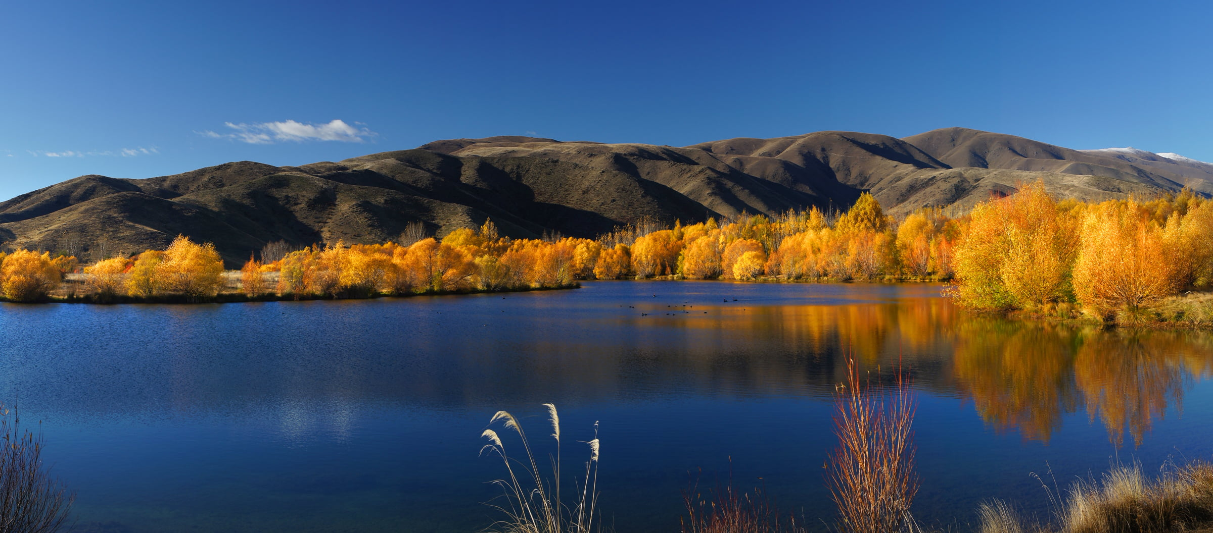 Bing Hd Wallpaper Fall Yellow Trees Near Mountain Near Body Of Water During
