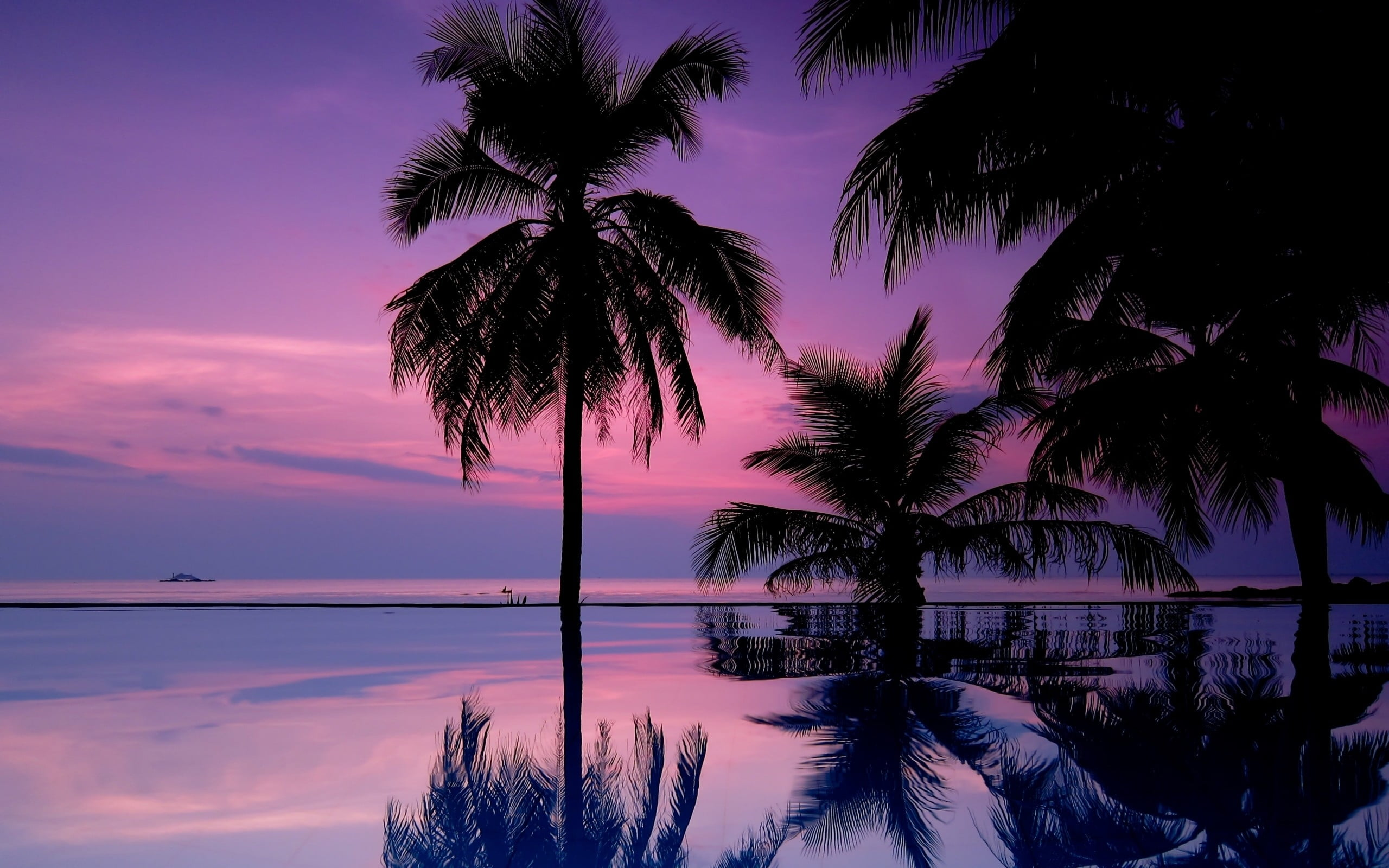 Iphone 2g Wallpaper Body Of Water With Coconut Trees During Sunset Hd