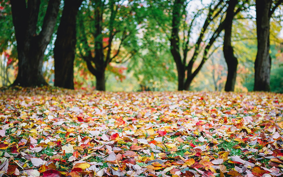 Fall Of The Leafe Wallpaper Dried Leaves On Ground Hd Wallpaper Wallpaper Flare