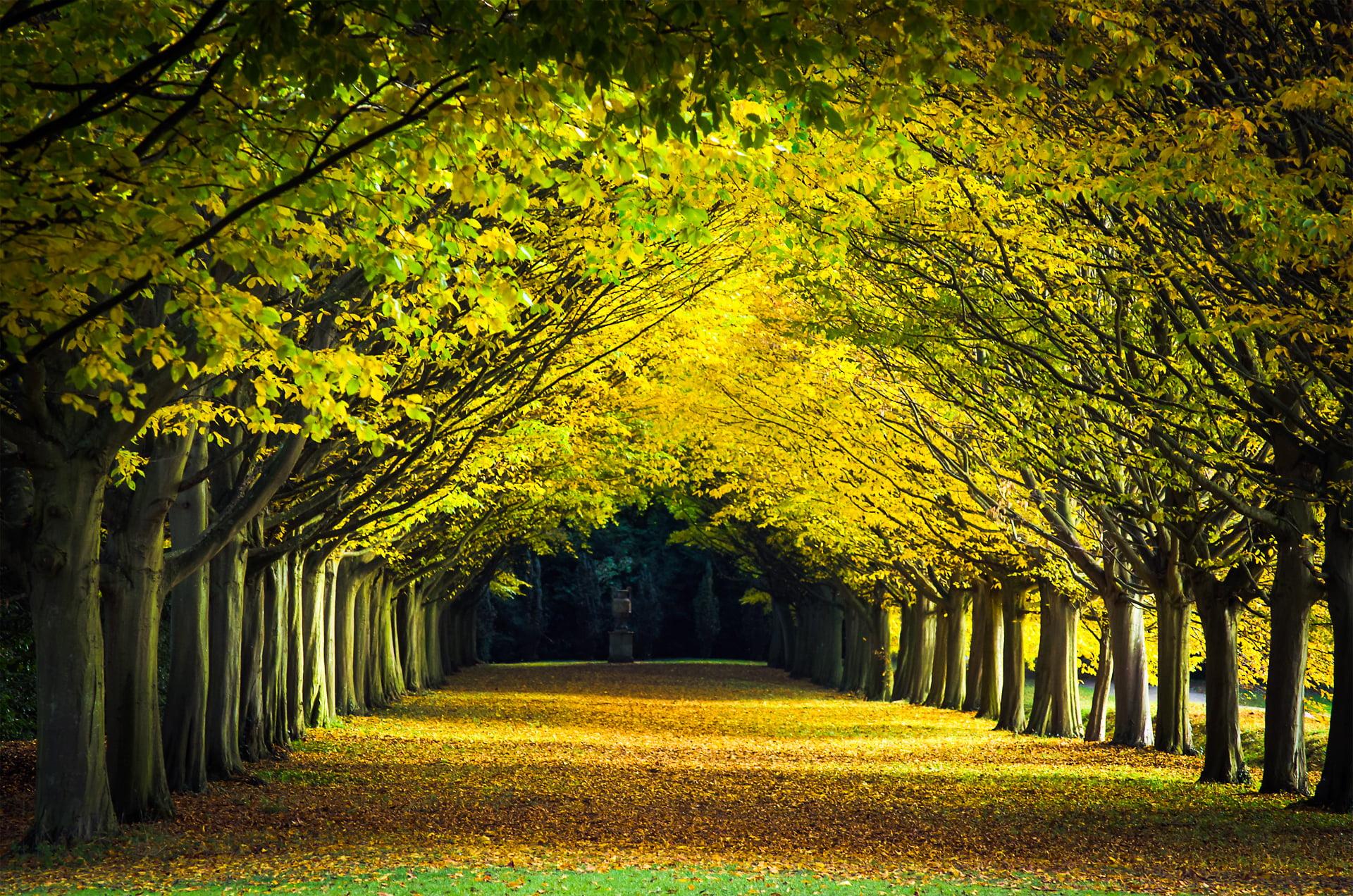 Victoria Falls Hd Wallpaper Landscape Photo Pathway Between Trees Cambridge Hd