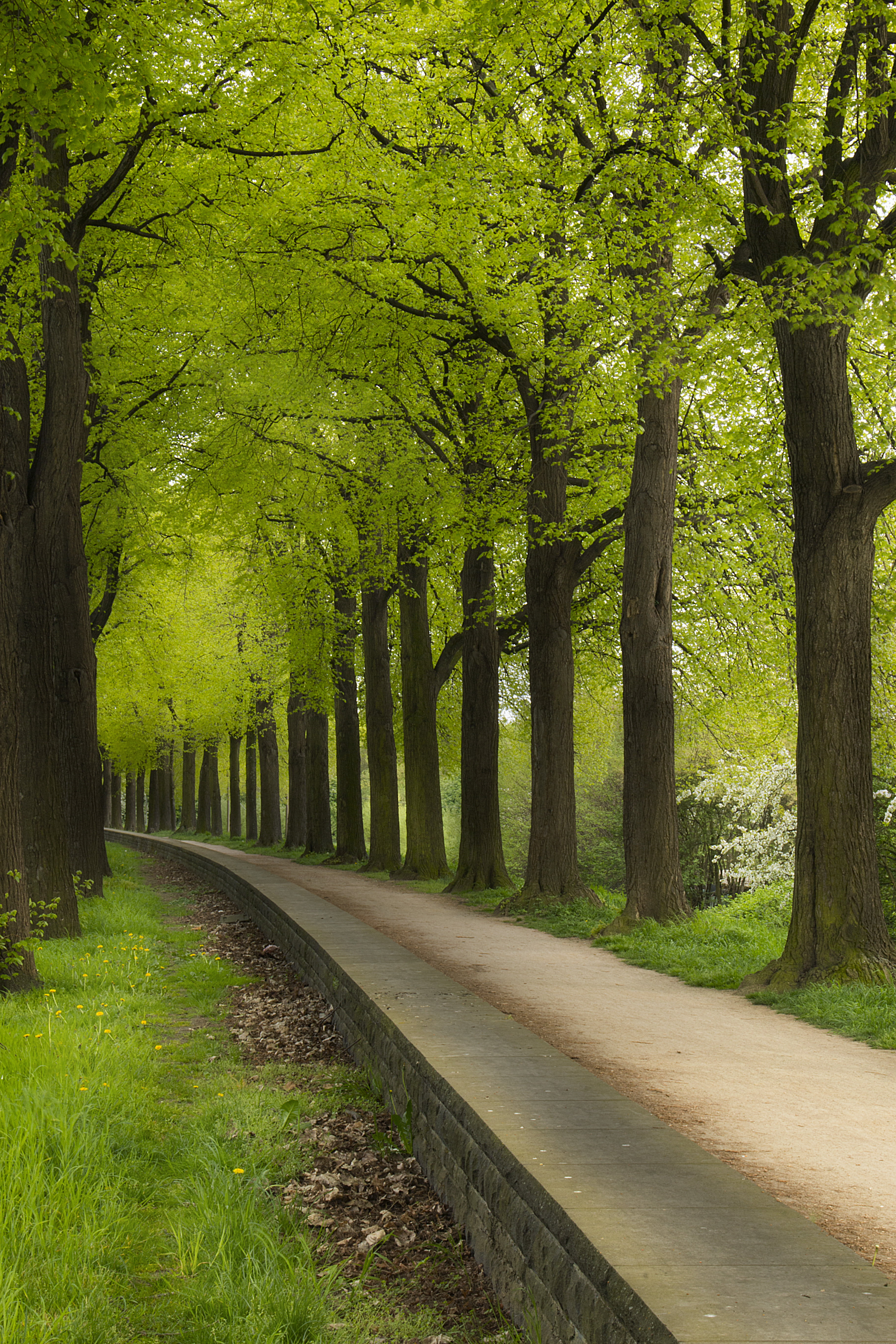 Iphone 2g Wallpaper For Iphone X Grey Concrete Road In Between Green Trees Hd Wallpaper