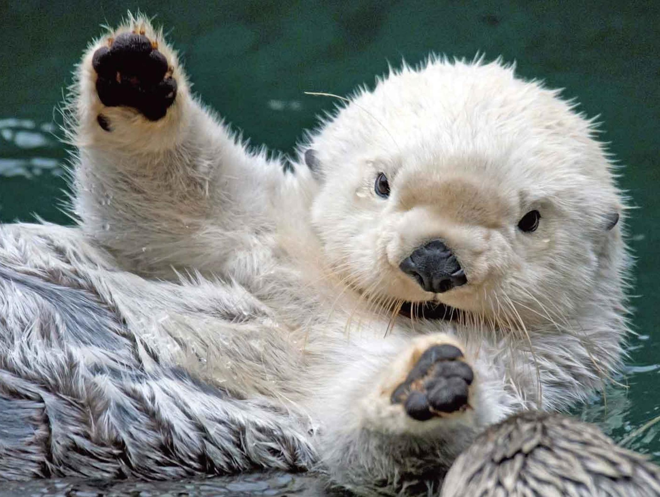 3d Wallpaper Of Dogs Cute Baby Sea Otter Wallpaper Free Baby Animal Download