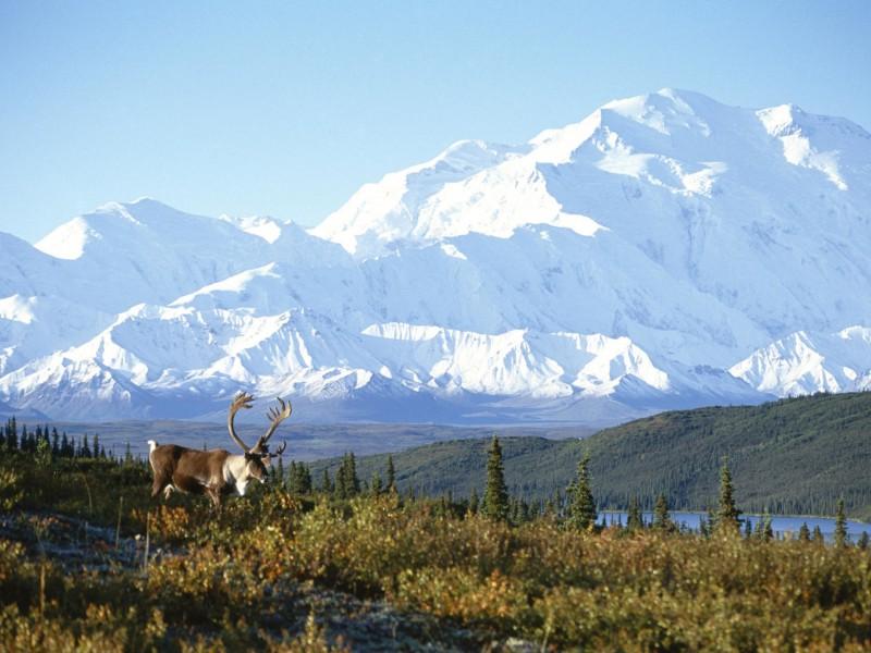 Starcraft Wallpaper Hd Snow Capped Mountain Alaska Wallpaper Free Downloads