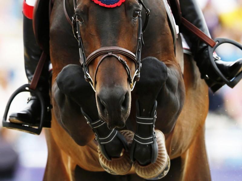 Katrina Kaif 3d Wallpaper Equestrian Sport Wallpaper Free Horse Jumping Image