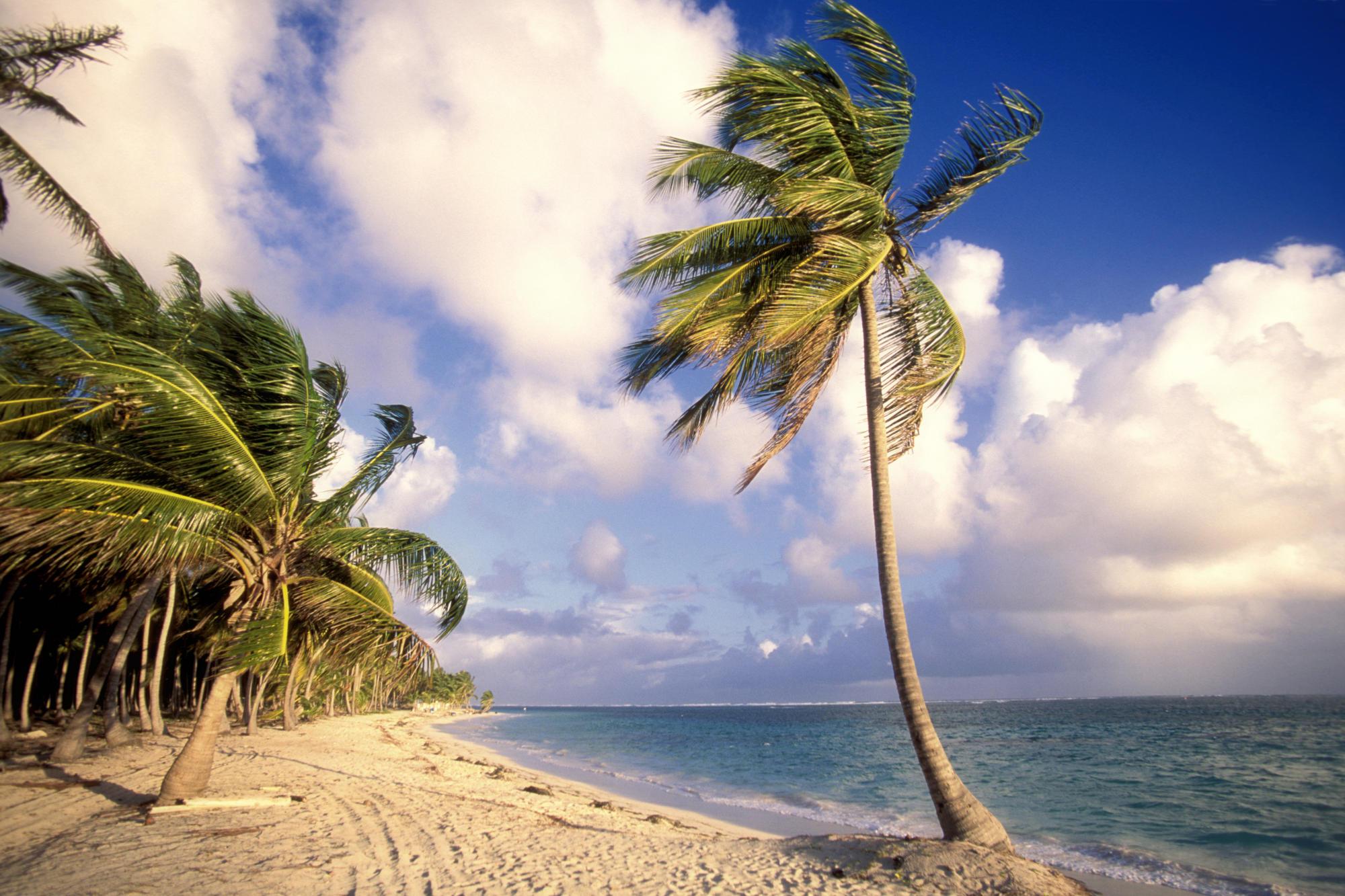 Katrina Kaif 3d Wallpaper Palm Beach At Punta Cana Dominican Republic Caribbean