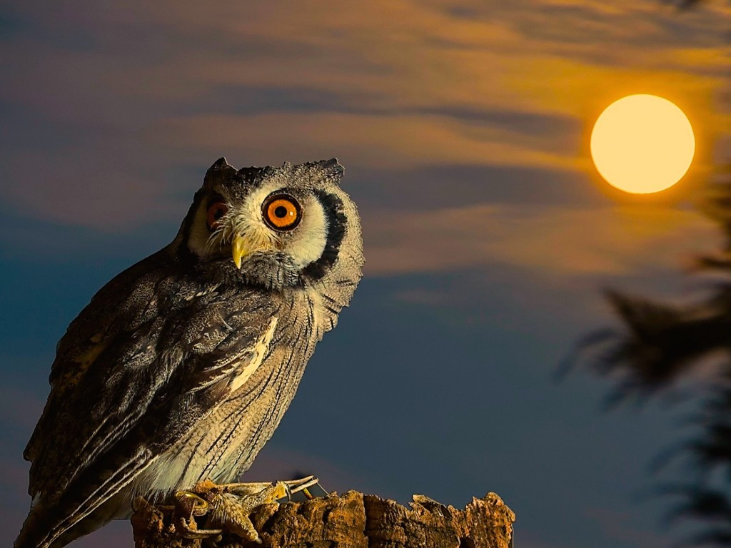 Cute Owl Wallpaper For Mac Owl Full Moon Hd Wallpaper Free Hd Owl Downloads