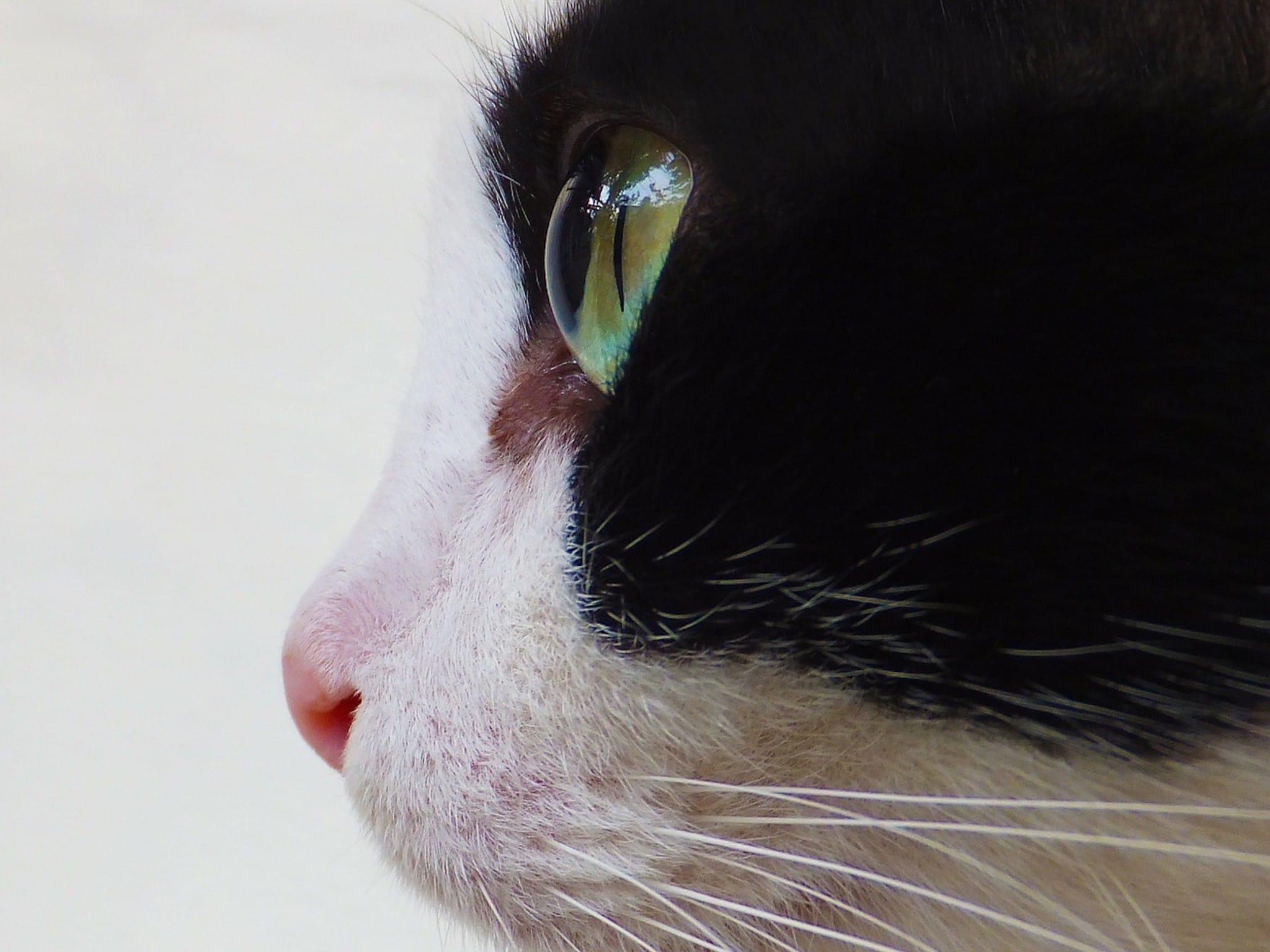 Katrina Kaif 3d Wallpaper Cat Eye Profile Wallpaper Free Hd Cute Cats
