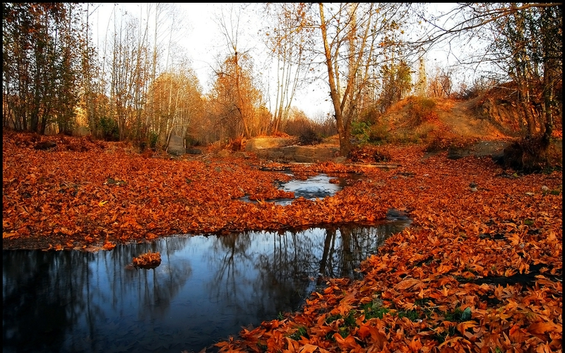 Fall High Definition Wallpapers Autumn Forest Just After Rain Nature Forests Hd Desktop