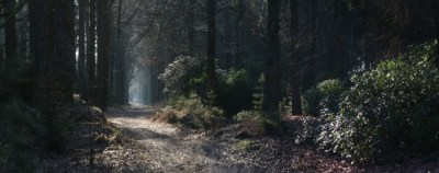 Download 7680x2160 Fog, Forest, Path Wallpapers - WallpaperMaiden
