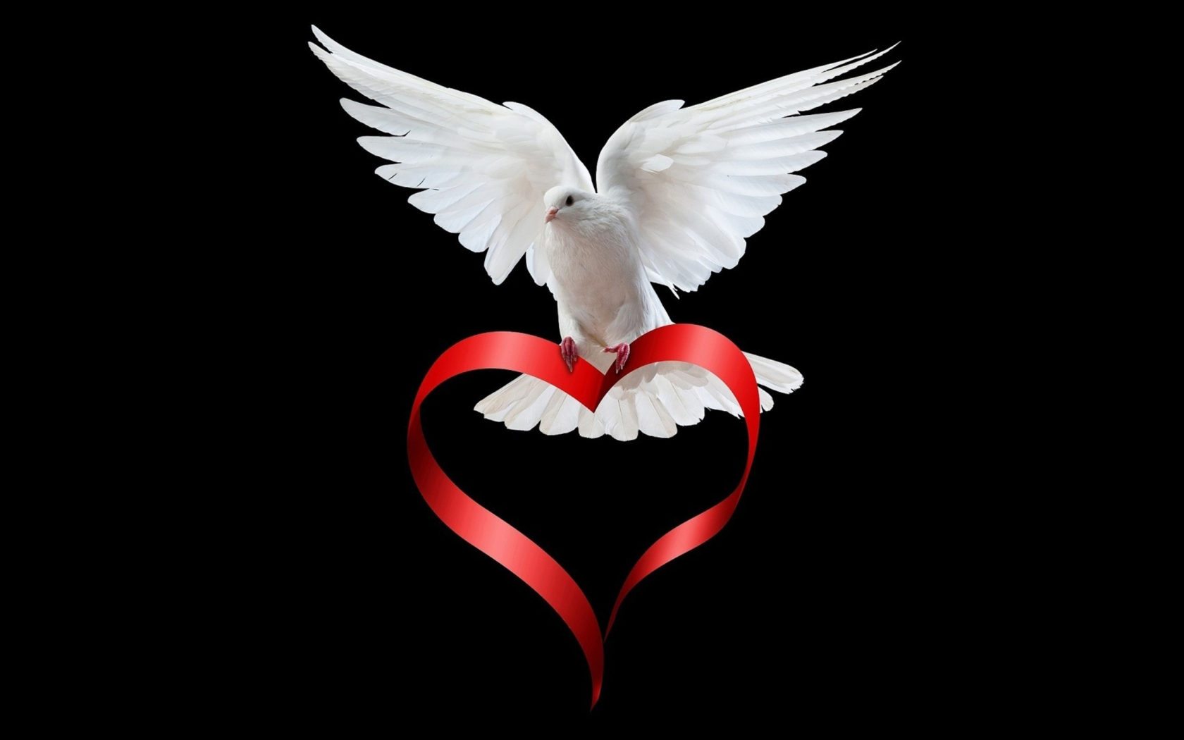 Animated Wallpaper For Android Phone Free Download Elegant Dove Download Free Wallpapers For Phone Wallpaper