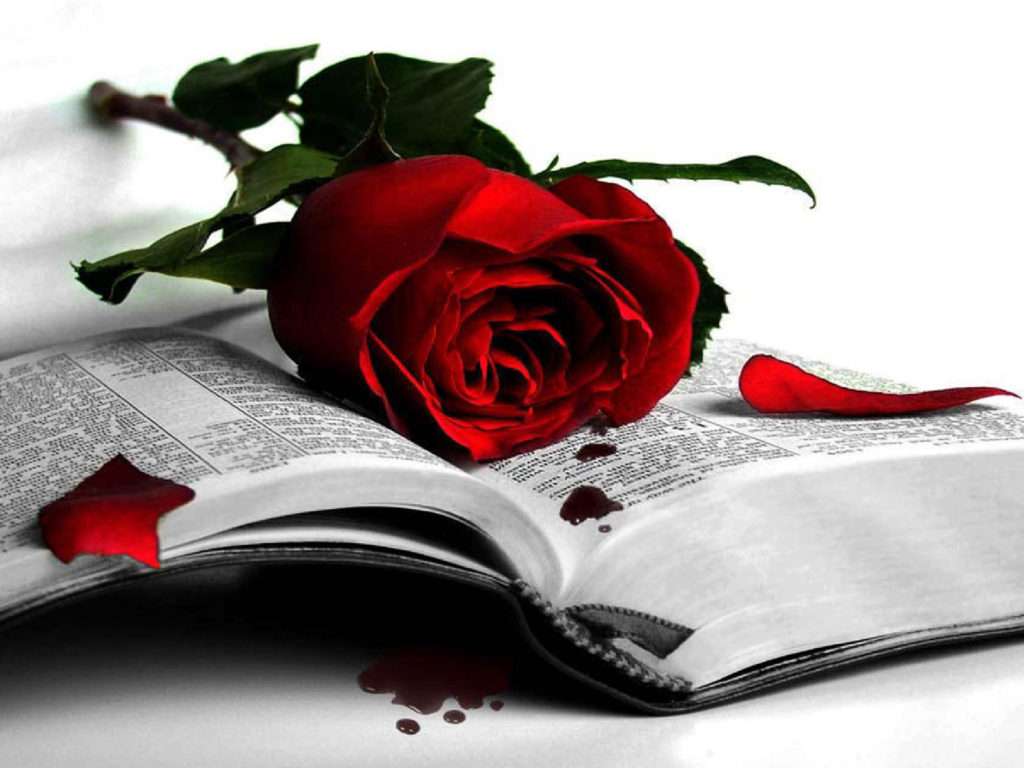 Iphone Happy New Year Wallpaper Red Rose Memory Of My Great Love Wallpapers13 Com
