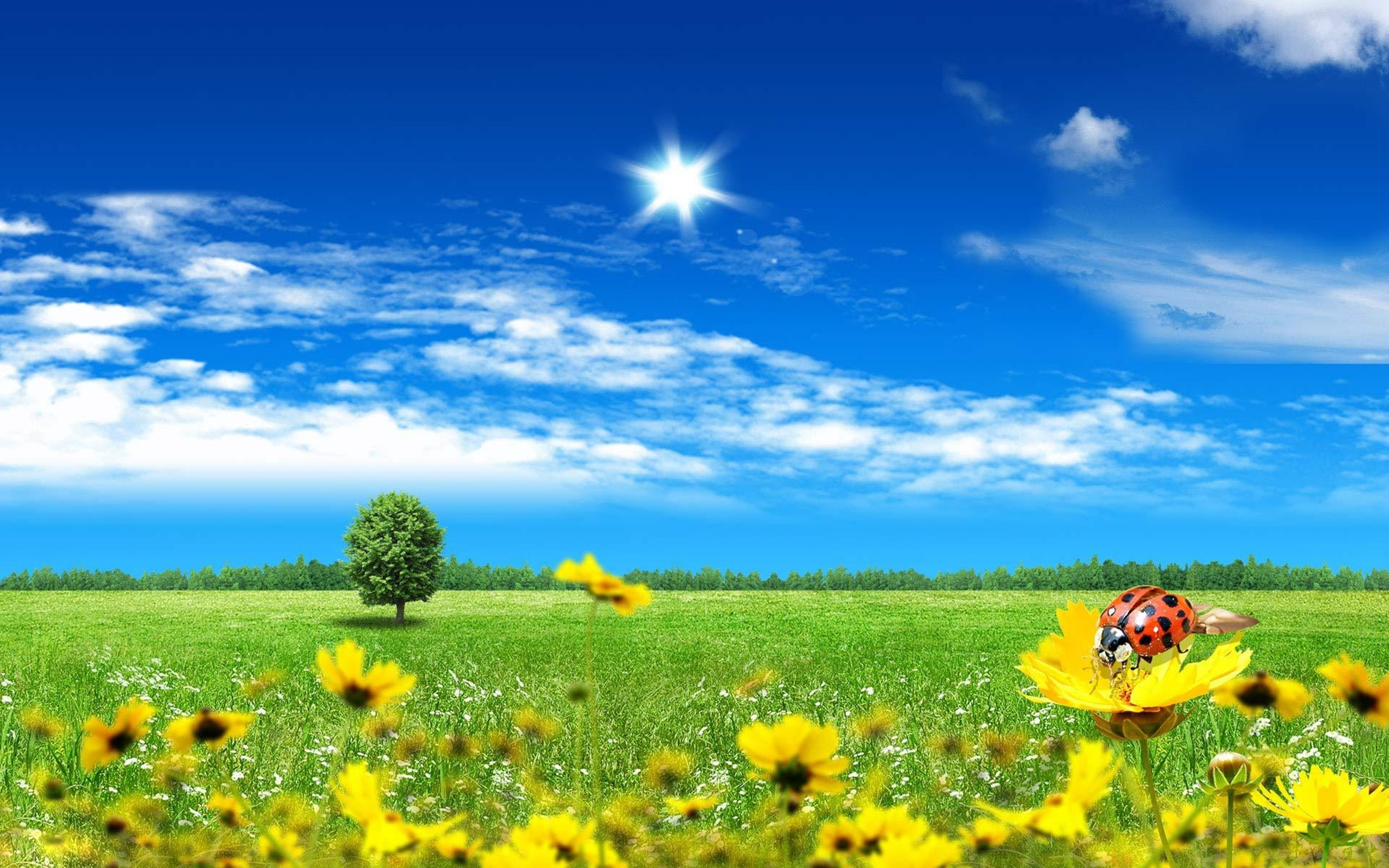 Windows 7 3d Desktop Wallpapers Free Download Summer Day Artistic Wallpaper 2560x1600 Wallpapers13 Com