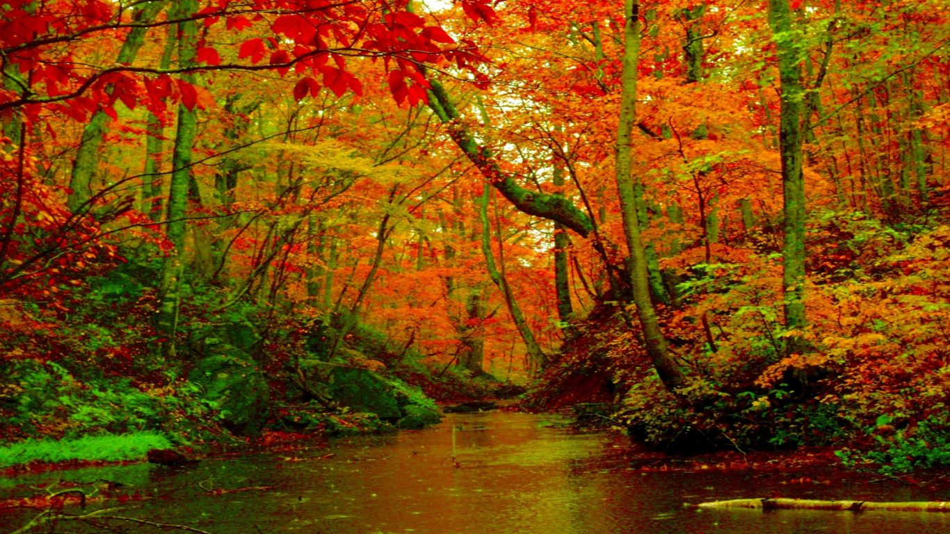 National Geographic Wallpaper Fall Foliage Autumn Forest River Desktop Background Hd Wallpapers 1560