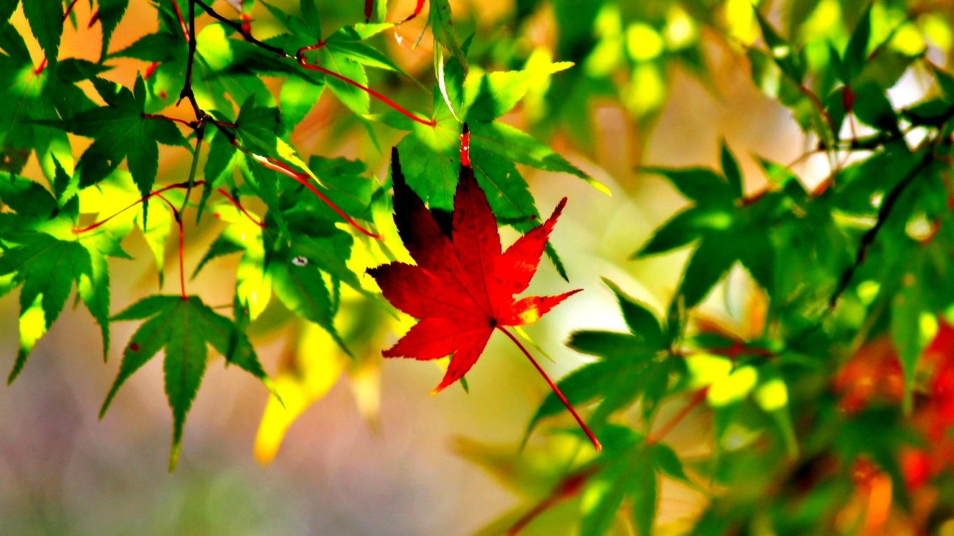 Red Fall Leaves Iphone Wallpaper Autumn Leaves Nature Trees Branch Ultra 2560x1600 Hd