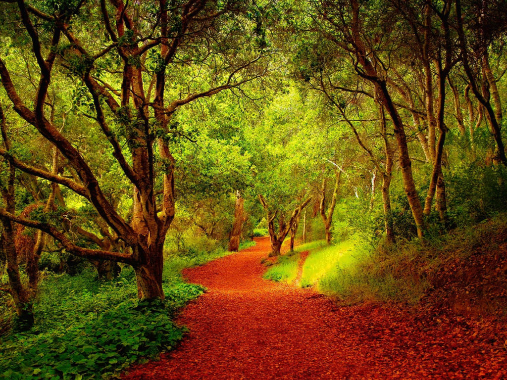 Desktop Wallpaper Fall Flowers Beautiful Forest Pathway 03846 Wallpapers13 Com