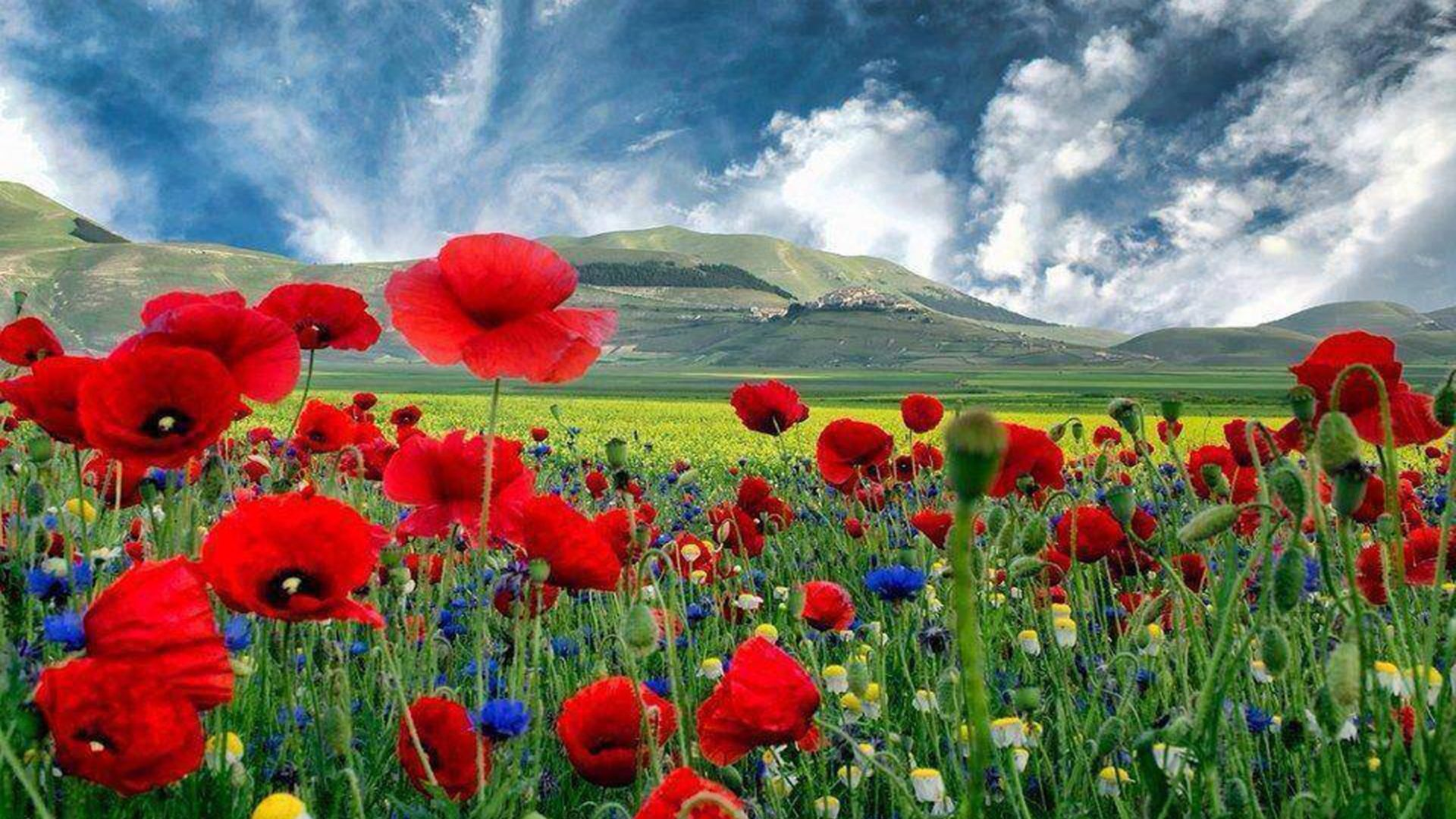 Daisy Iphone Wallpaper Beautiful Hd Background With Poppies Wallpapers13 Com