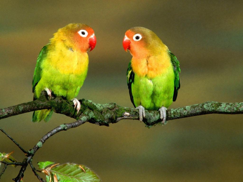 New Cute Girl Wallpaper Download Cute Love Birds 90764 Wallpapers13 Com