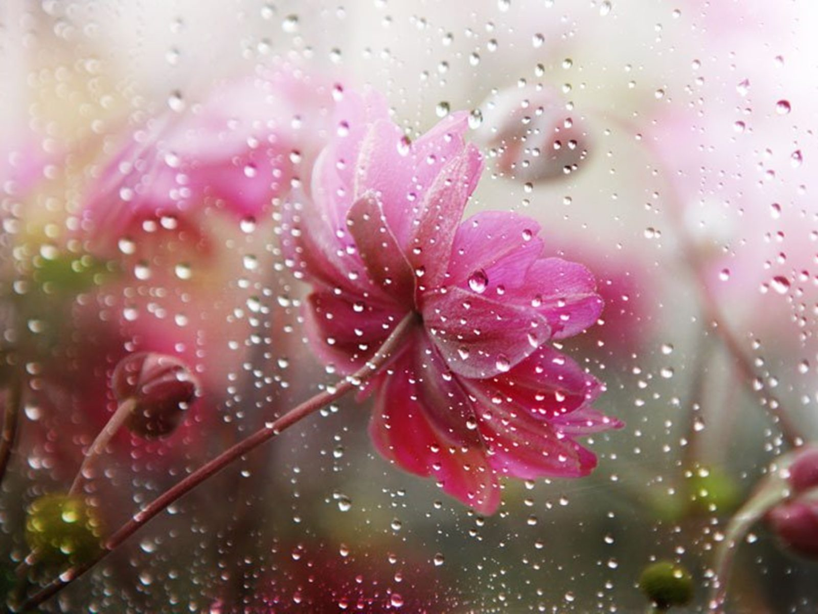 Cars Iphone 7 Wallpaper Falling Rain In Flower Flowers Under The Rain