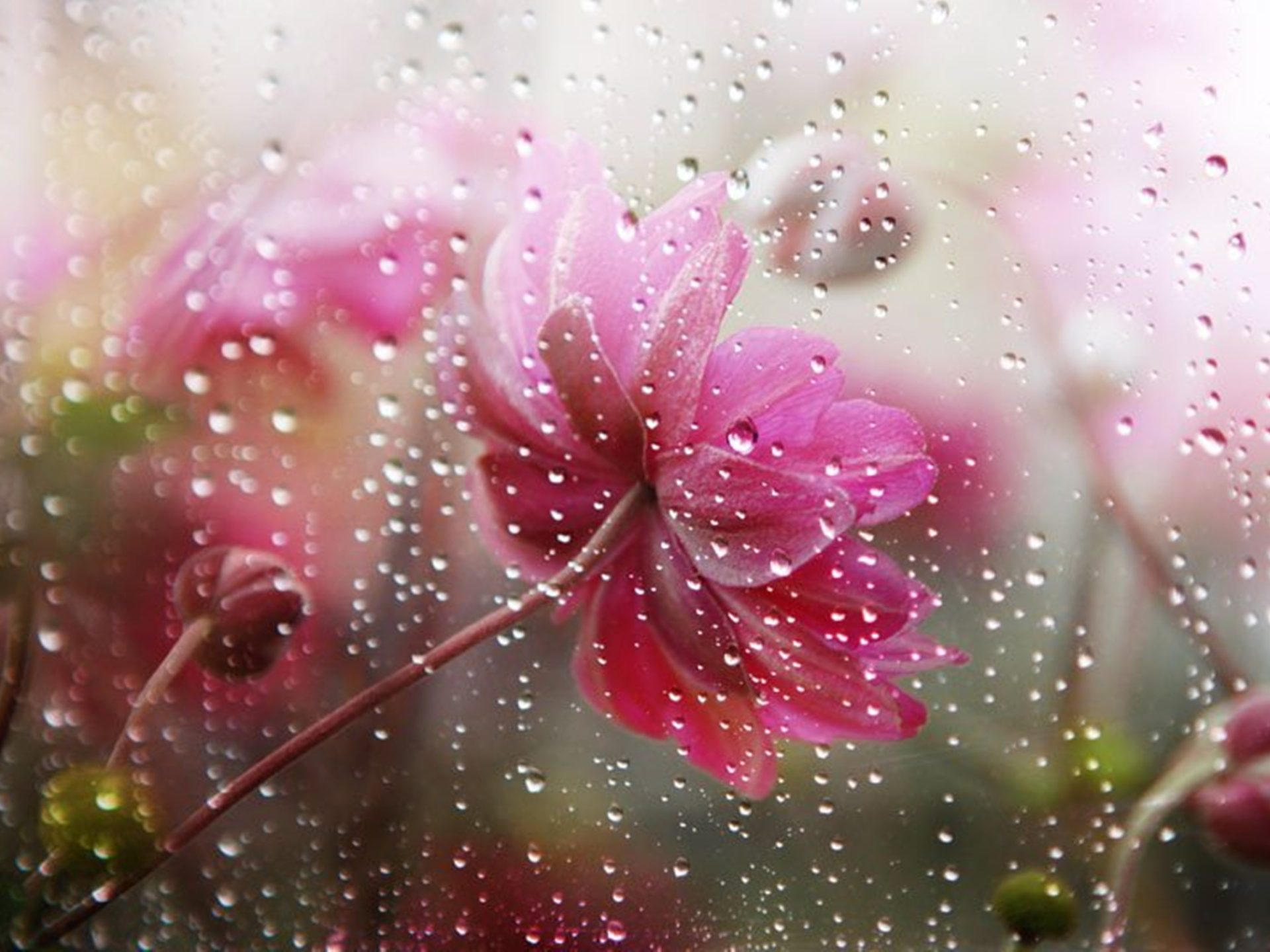3d Wallpaper Download For Windows 10 Falling Rain In Flower Flowers Under The Rain