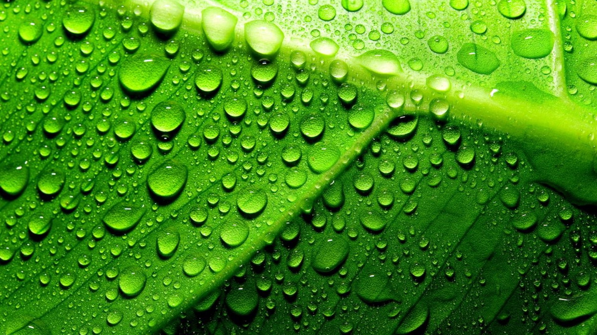 Iphone X Frame Wallpaper Green Leaf With Water Droplets Hd Wallpaper Wallpapers13 Com