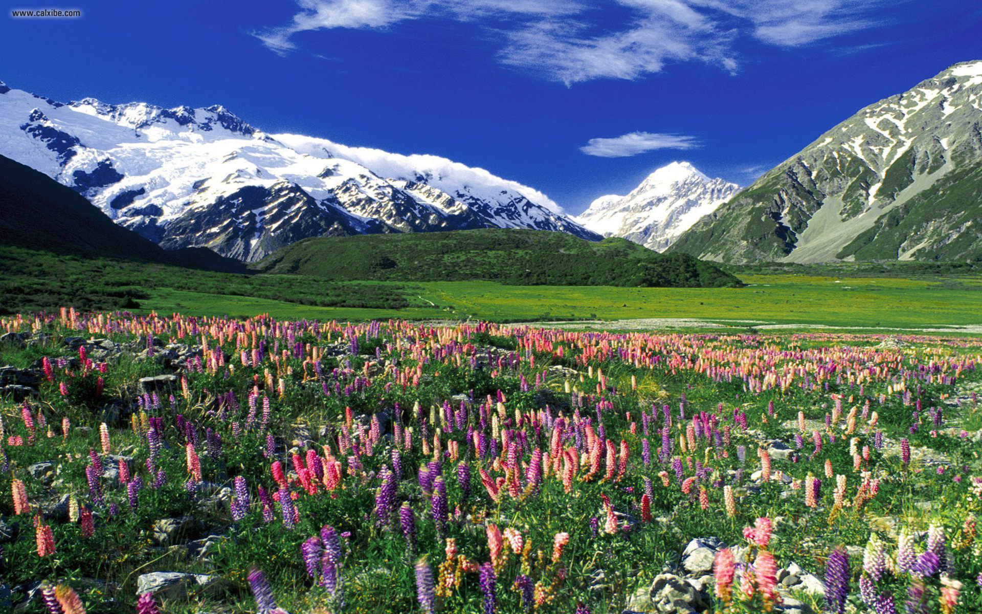Fall Scenes For Ipad Wallpaper Mountains Alps Flowers Landscape Wallpapers13 Com