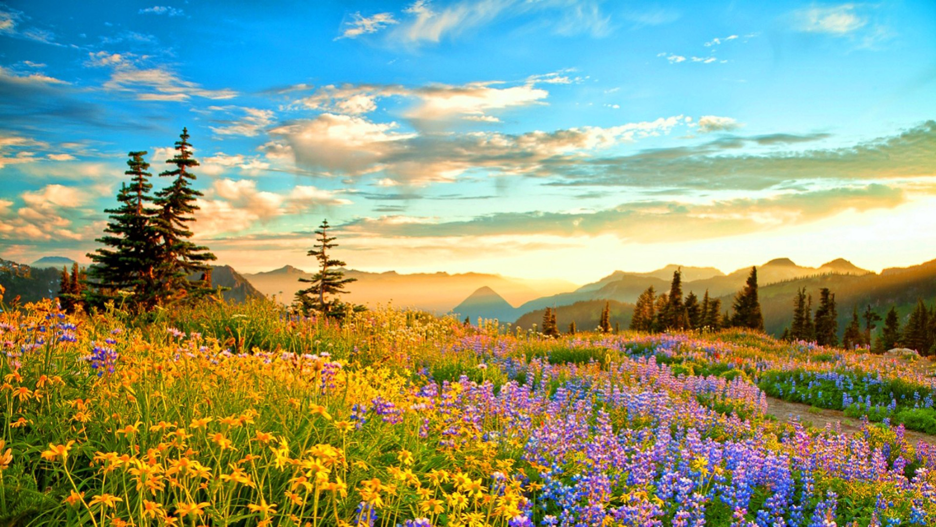 Fall Scenery Wallpapers Free Sunset Mountain Wilderness France Spring Mountain Flowers