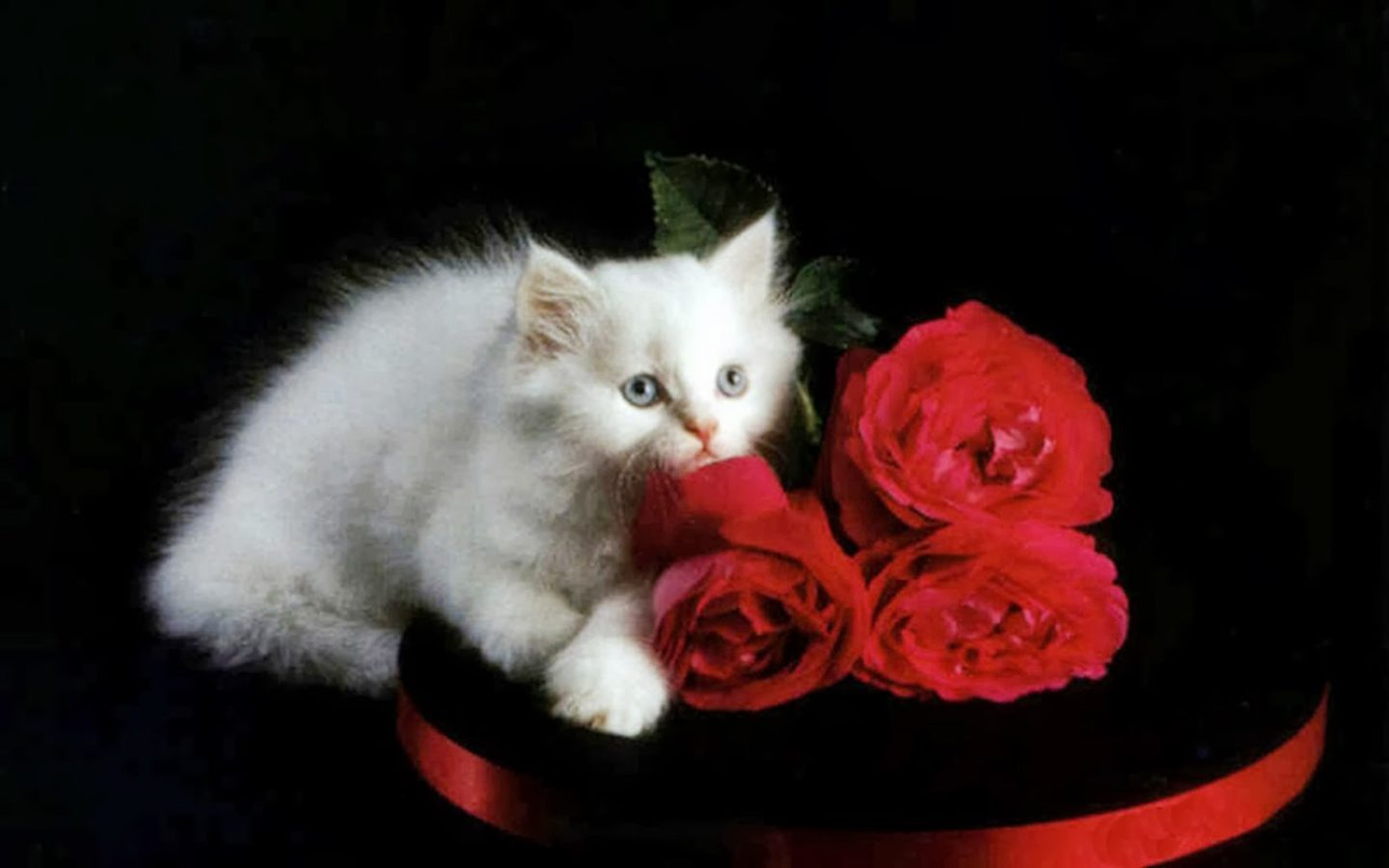 Wallpaper Full Hd 1080p 3d White Kitten And Red Roses Kittens Wallpapers13 Com