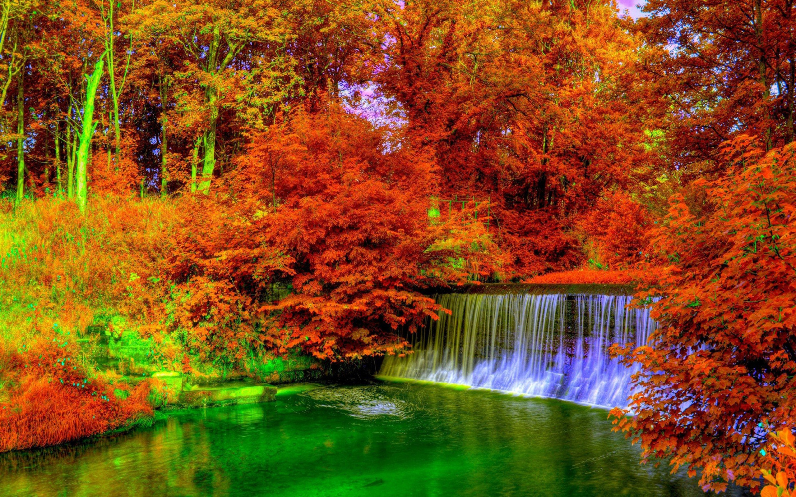 Fall Leaves Iphone Wallpaper Autumn Trees Nature Landscape Leaf Leaves 7652