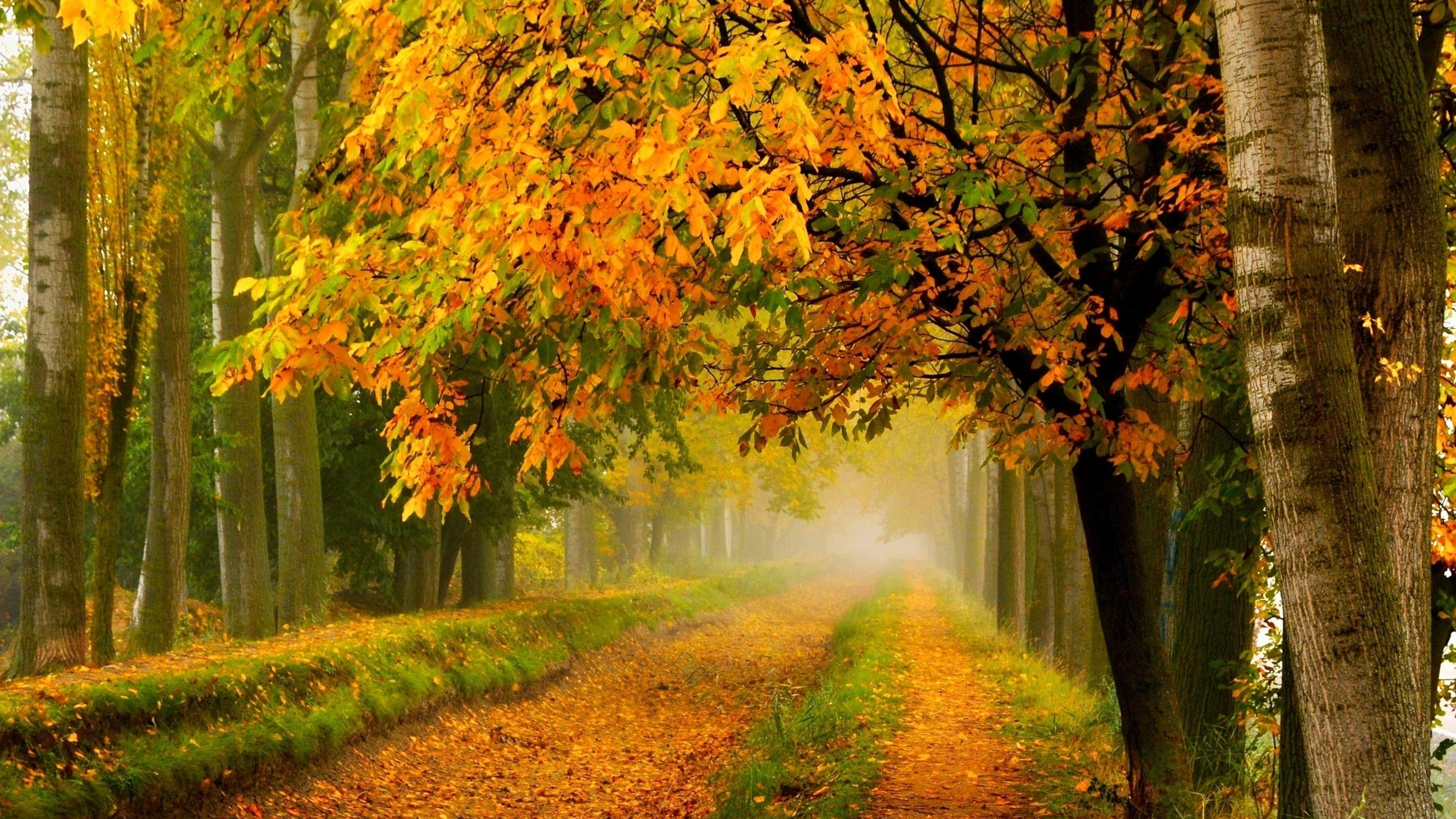 Iphone 5 Fall Wallpaper Background Autumn Trees With Yellow Leaves Country Road