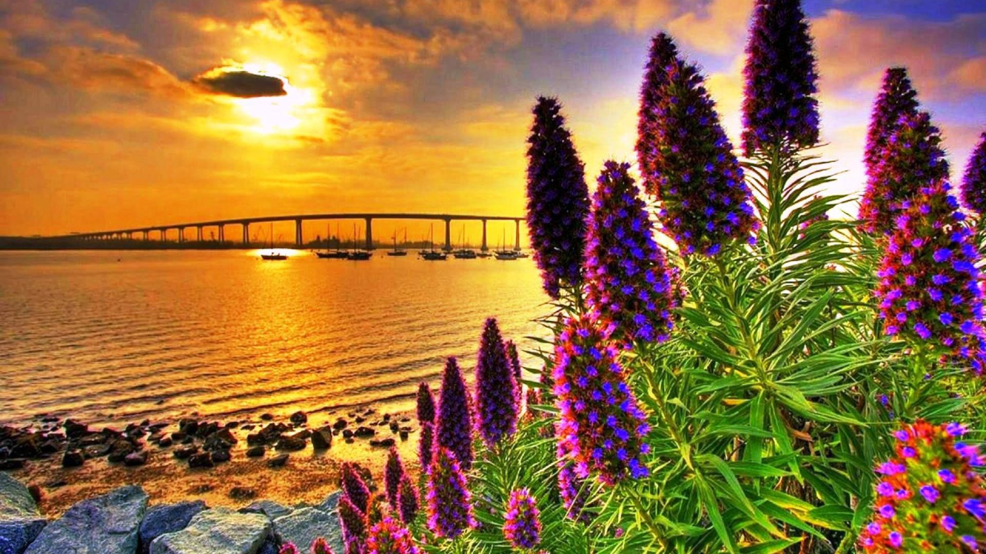 3d Flowers Wallpapers For Pc Coastal Flowers In Sunset Hd Wallpaper 604544