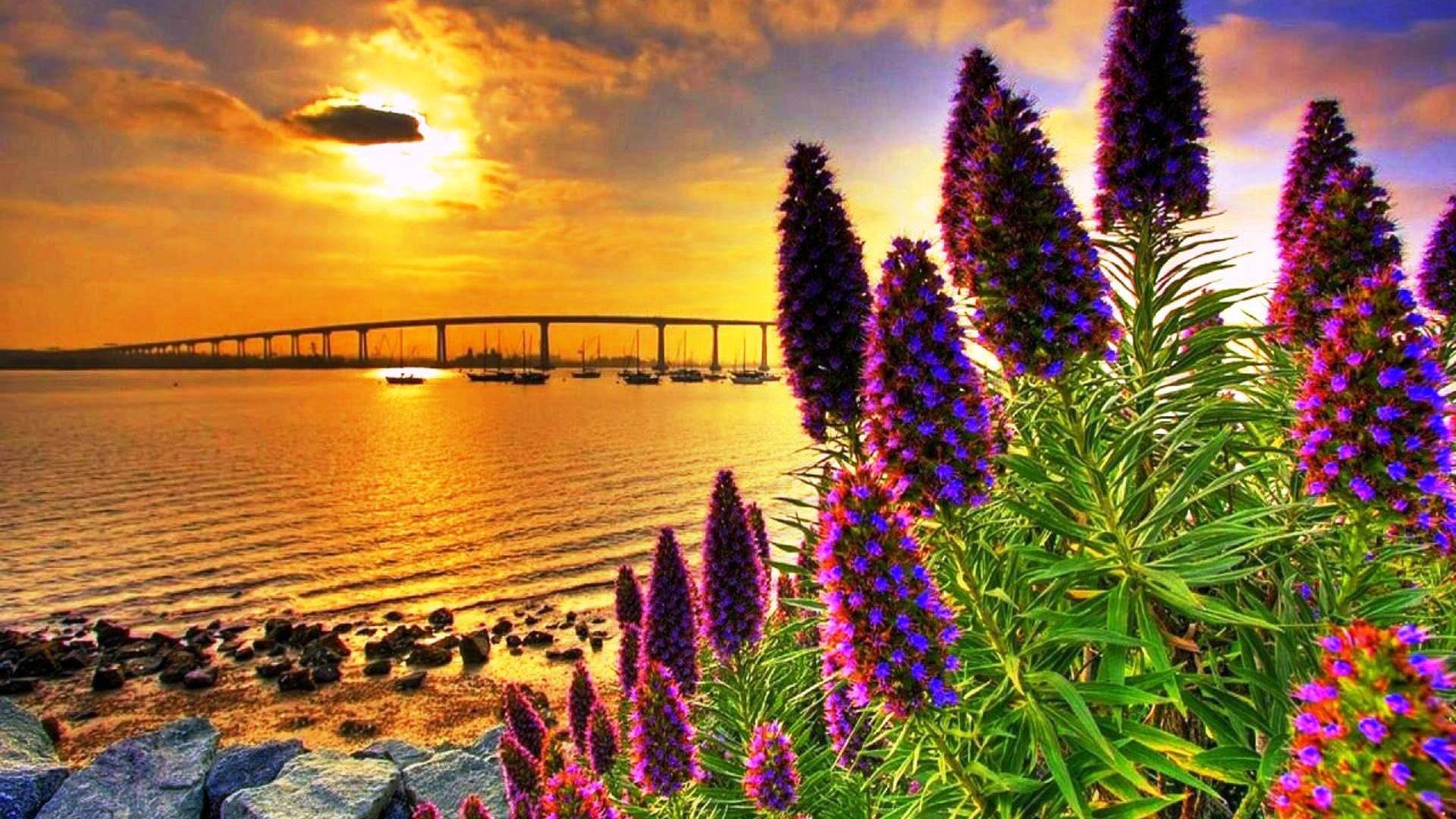 3d Wallpaper Hd 1920x1080 Free Coastal Flowers In Sunset Hd Wallpaper 604544