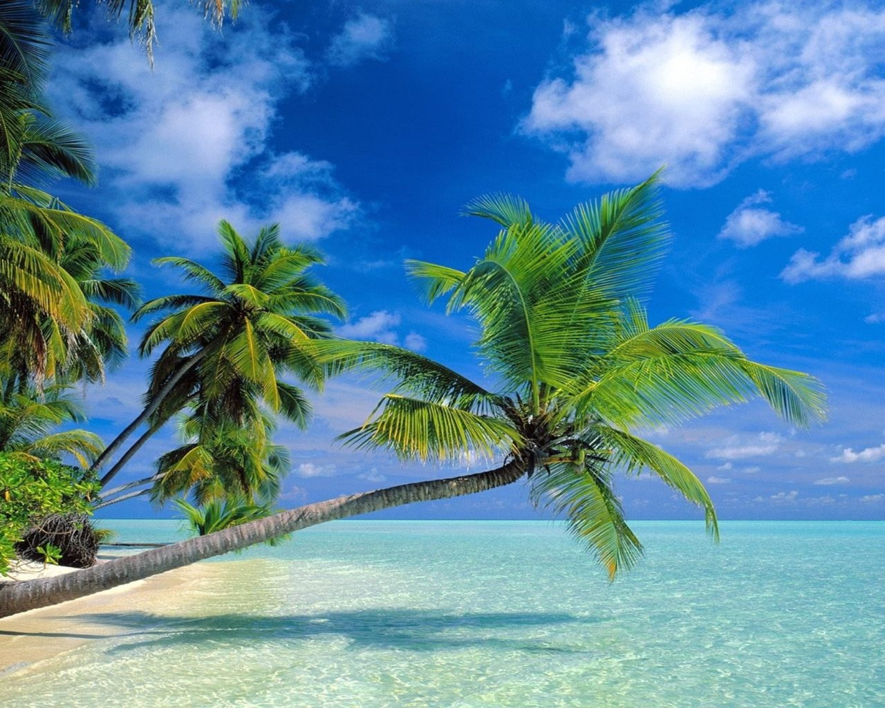 Beautiful Girl Hd Wallpaper For Pc Coconut Trees Beach 2560x1600 Wallpapers13 Com
