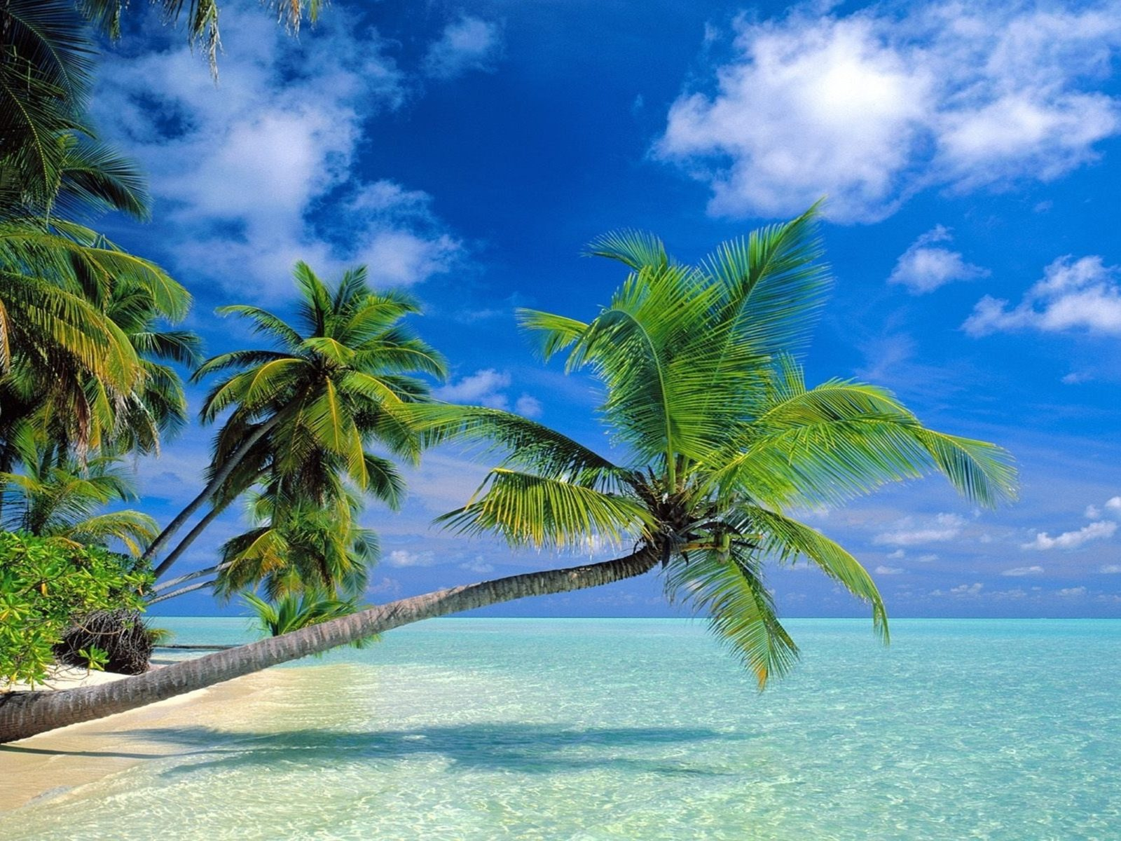 Water Iphone Wallpaper Coconut Trees Beach 2560x1600 Wallpapers13 Com