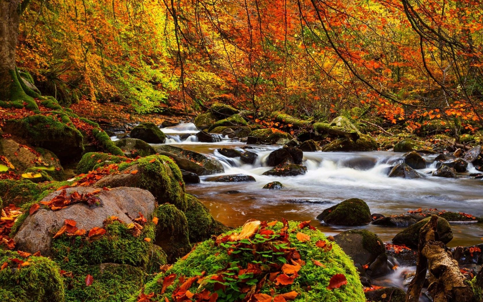 Falling Leaves Wallpaper For Iphone Fall Forest Stream Stones Moss Trees Ultra 3840x2160