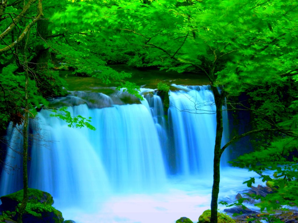 Water Iphone Wallpaper Forest River Falls Desktop Background Wallpaper 2560x1600