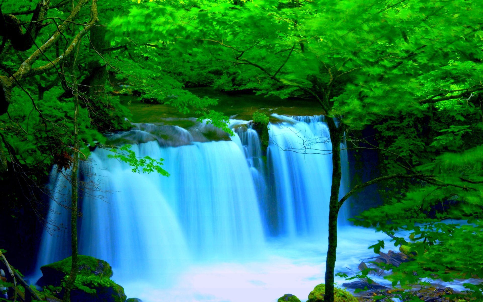3d Hd Wallpapers For Iphone Forest River Falls Desktop Background Wallpaper 2560x1600