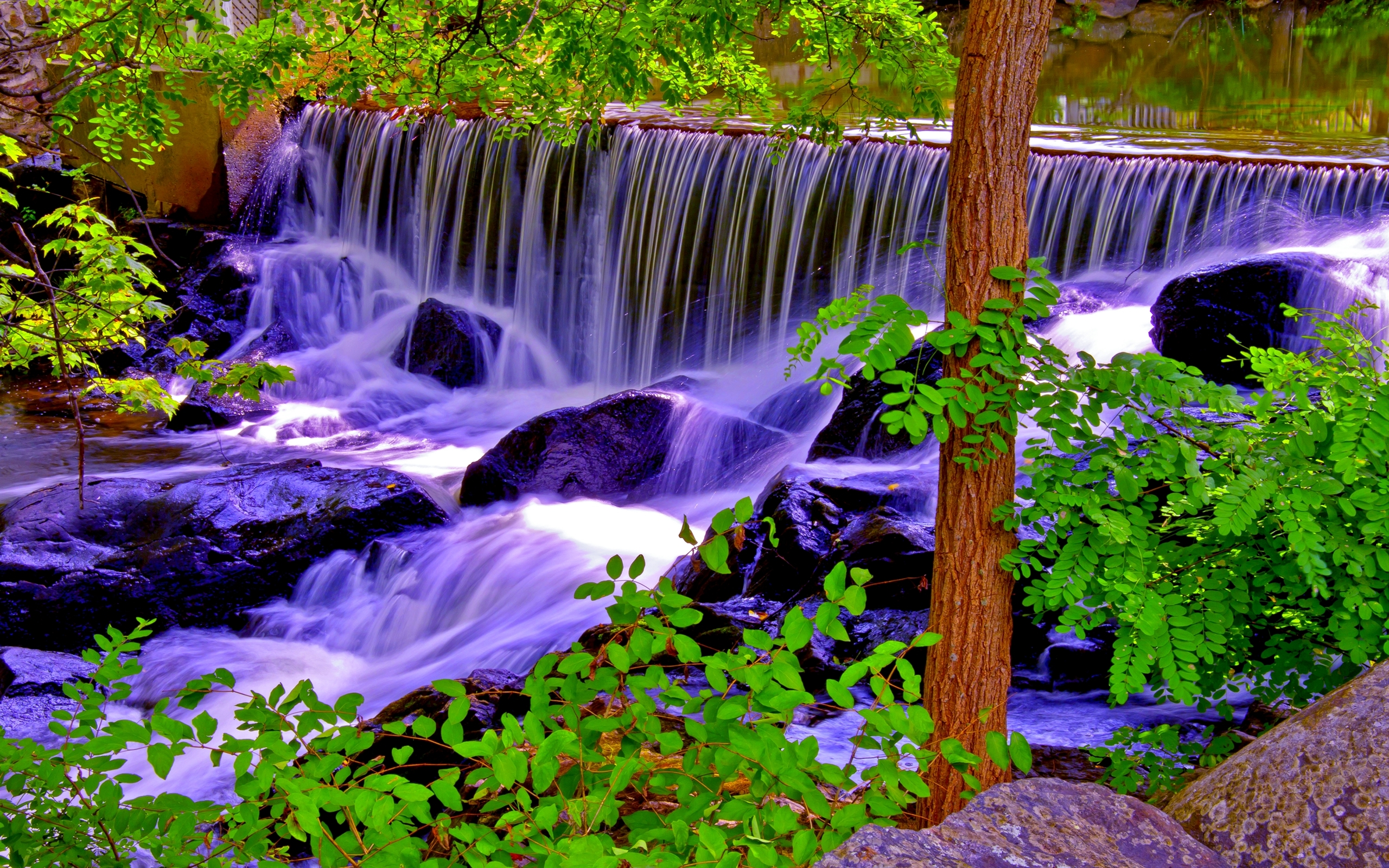 Natural Falls Wallpaper Free Download Forest River Falls Natural Wood Stone 168649 2560x1600
