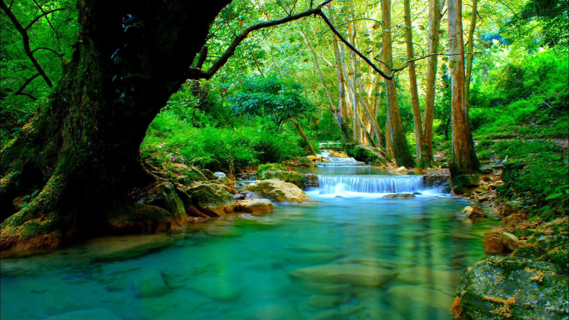 Fall Flowers Wallpaper For Desktop Forest River With Cascades Turquoise Water Rocks Trees