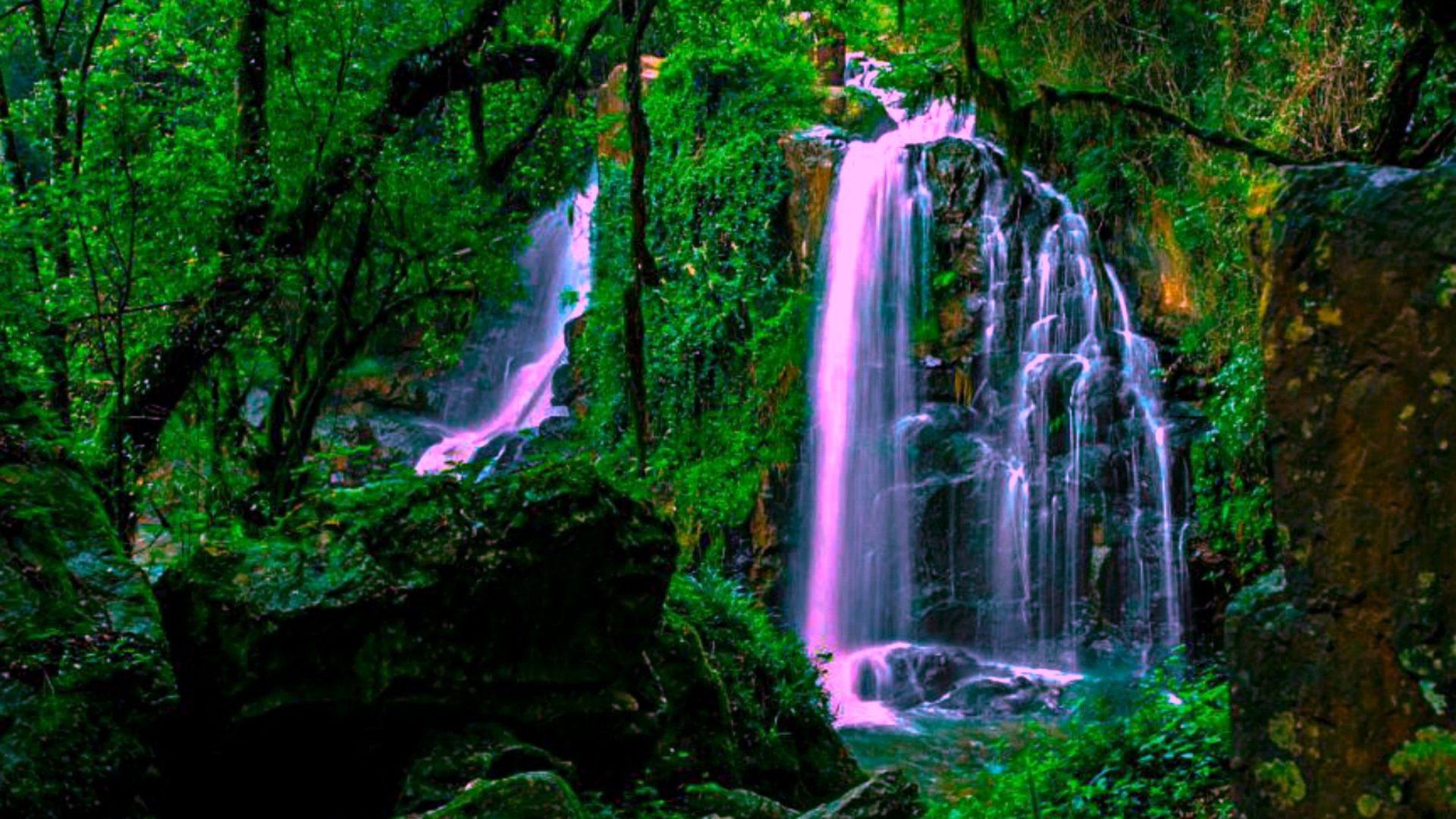 Niagara Falls At Night Wallpaper Magical Forest Waterfall Wide Wallpaper 552228