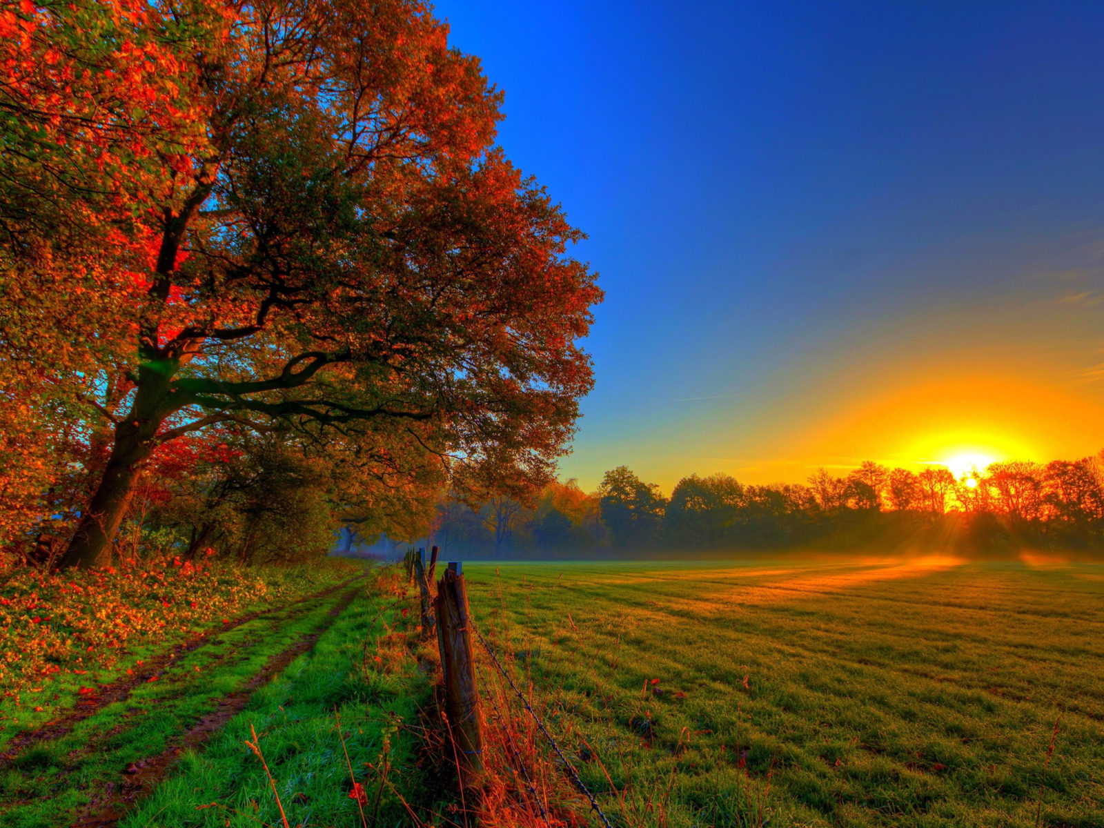 Wallpaper Sunrise At Fall Nature Autumn Road Forest Colorful Path Leaves Trees Fall