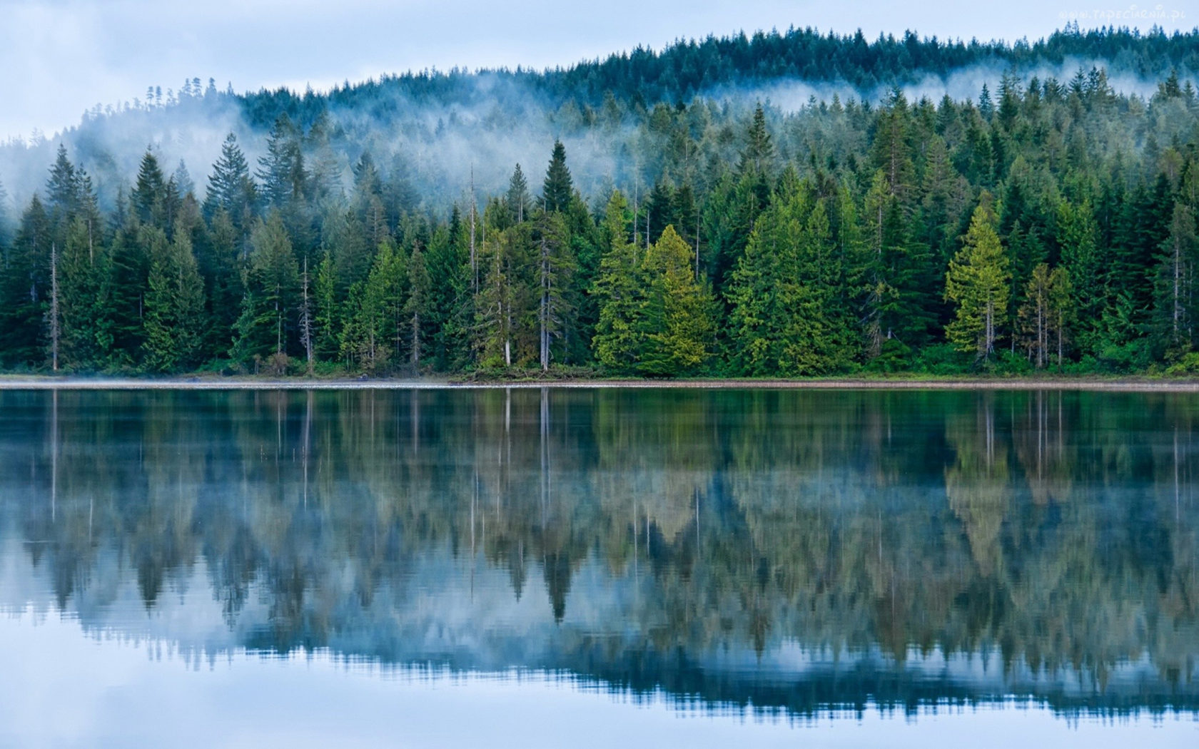 Free Fall Wallpaper And Screensavers Reflection On The Lake Pine Forest Fog Hd Desktop